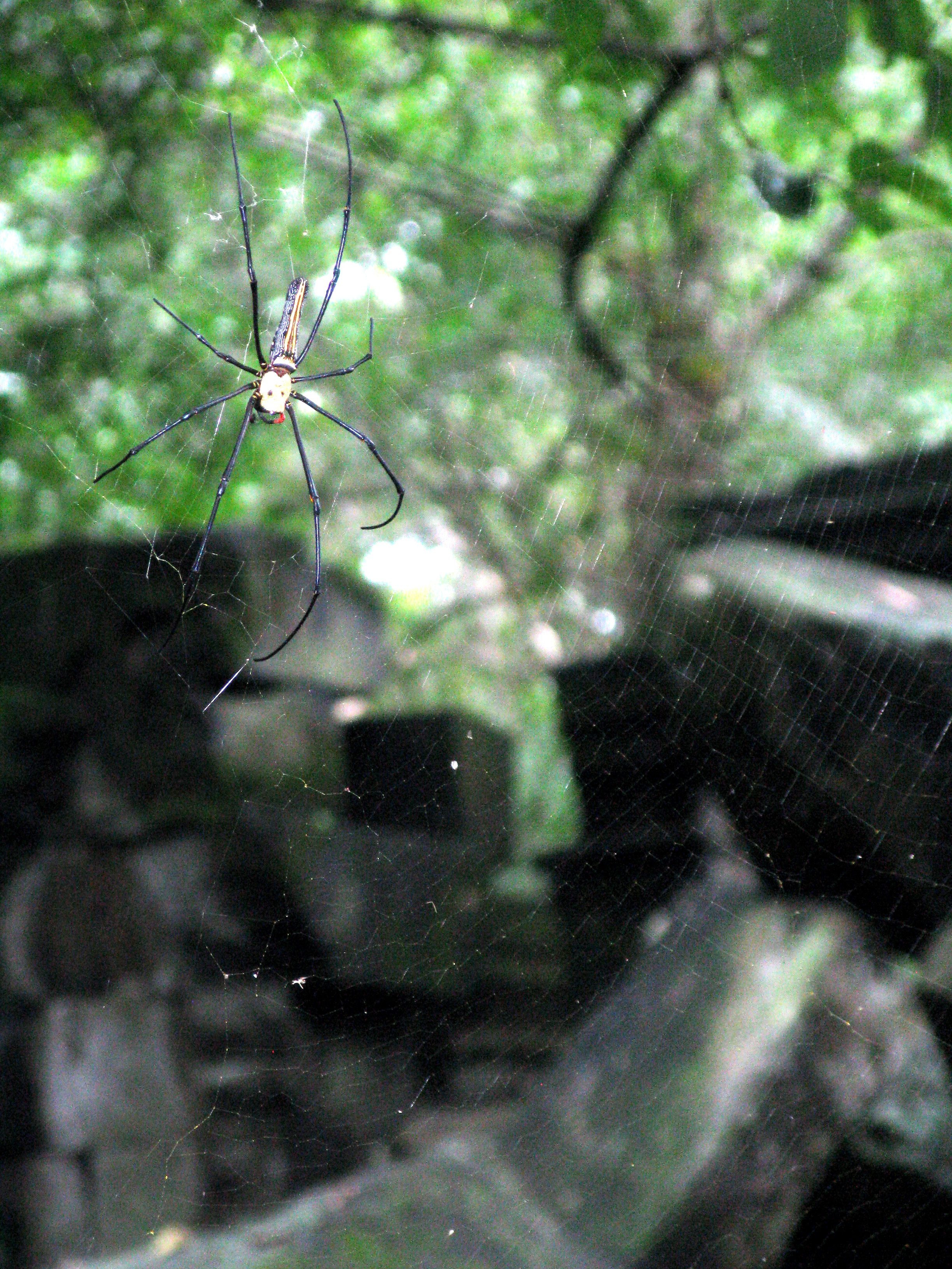 Keep a lookout for death's head spiders — their venom is more poisonous than that of a scorpion