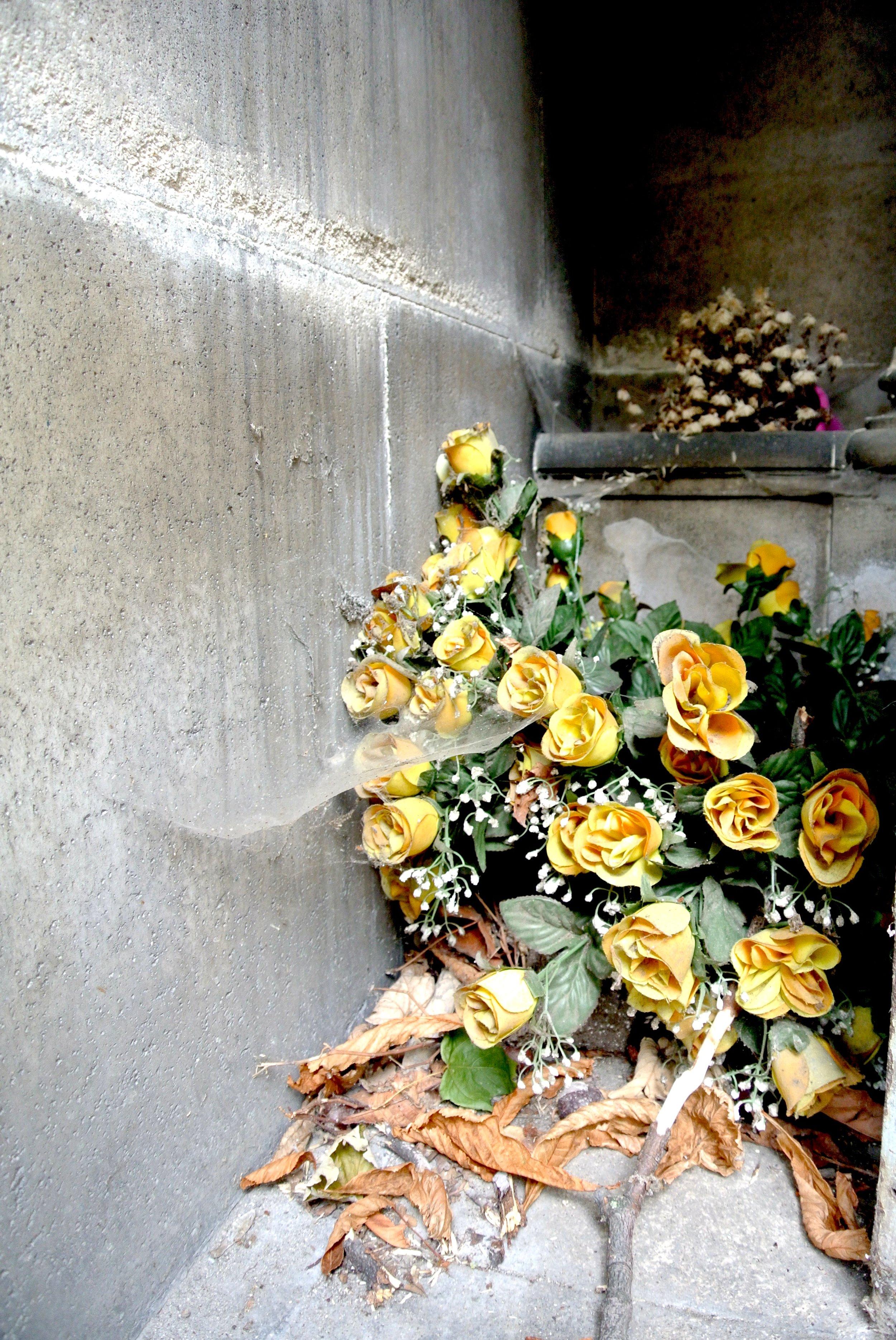 driedflowers.JPG