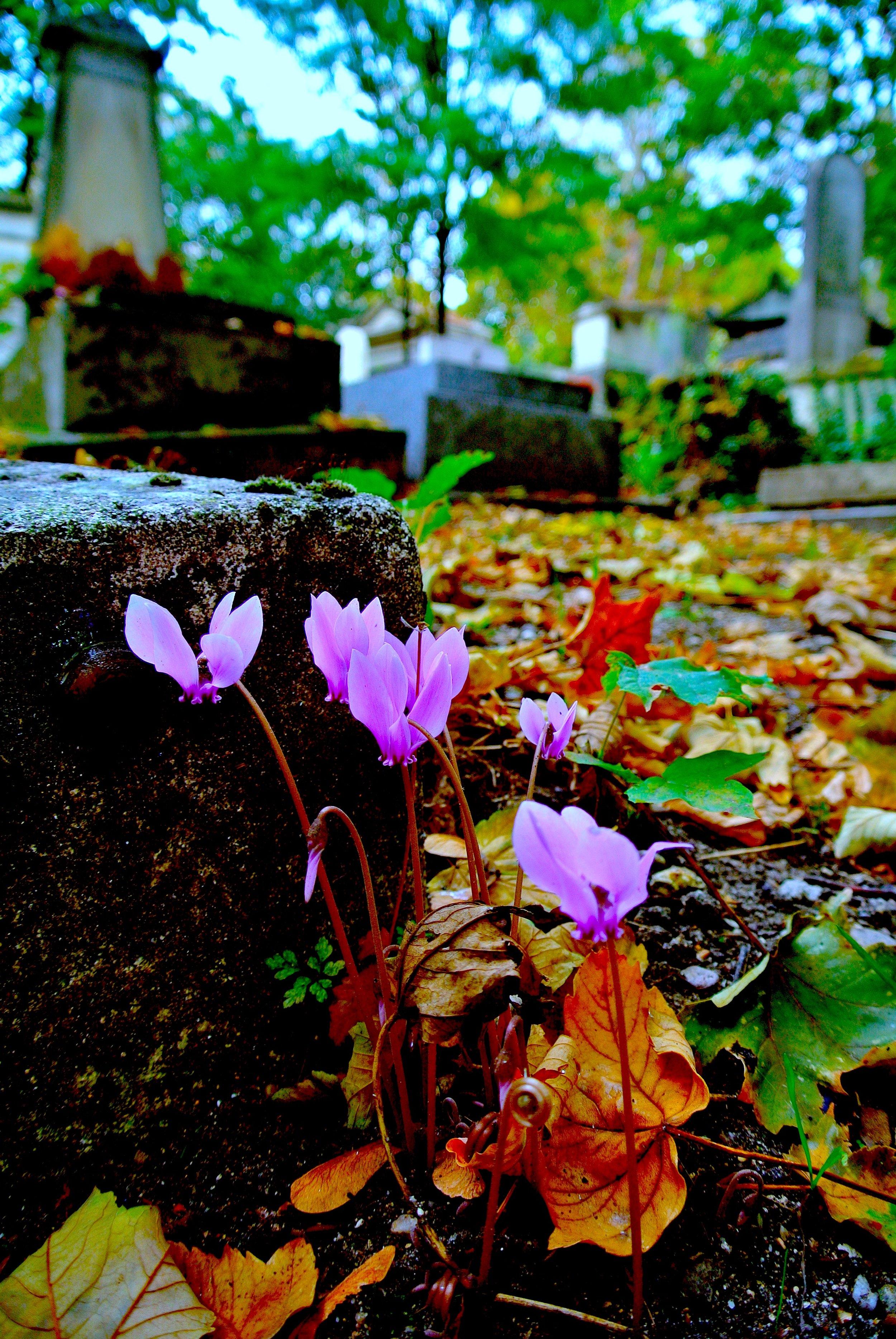 graveflowers.JPG
