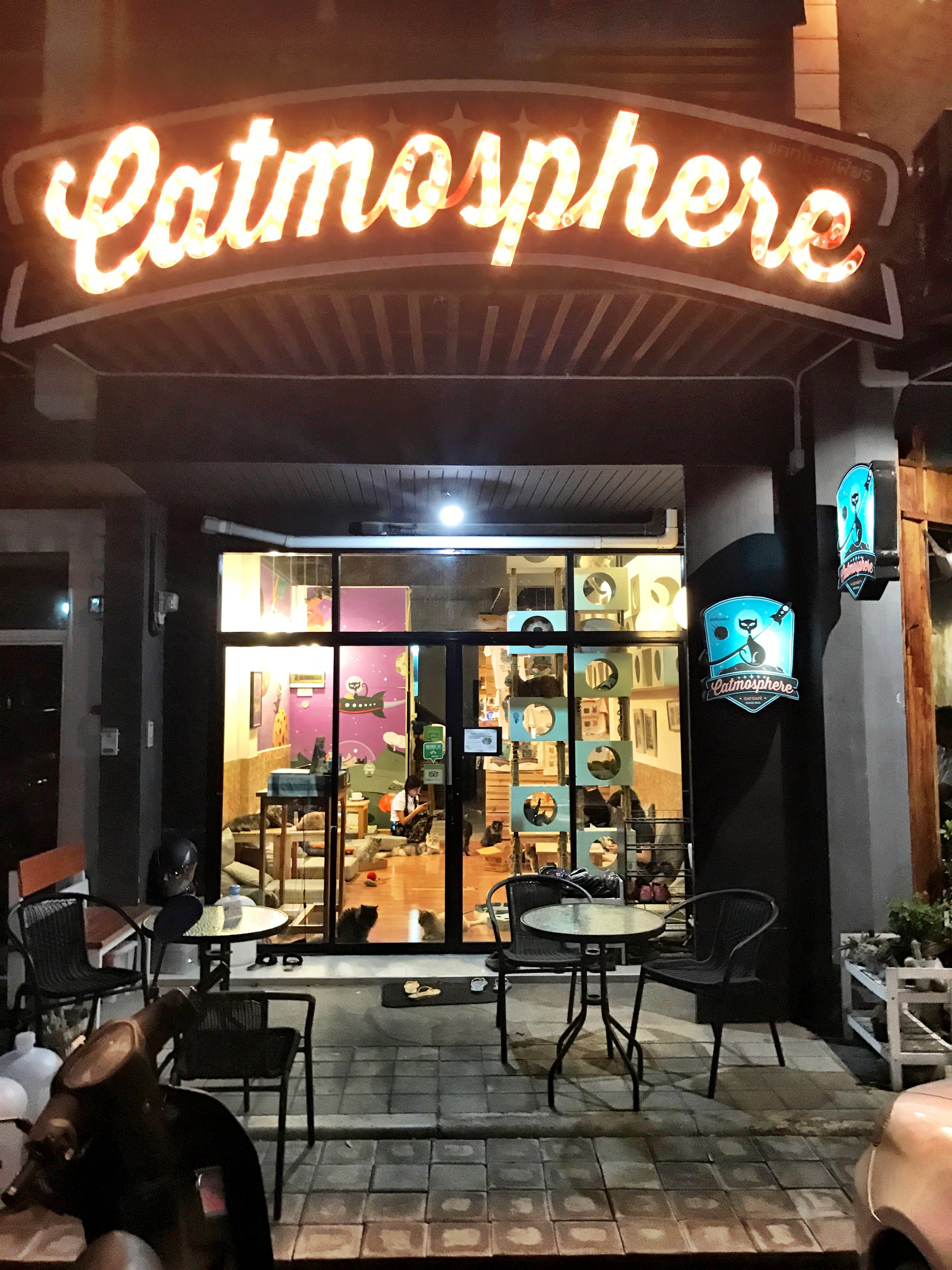 If you love cats, stop in Catmosphere for a caffeine and feline fix