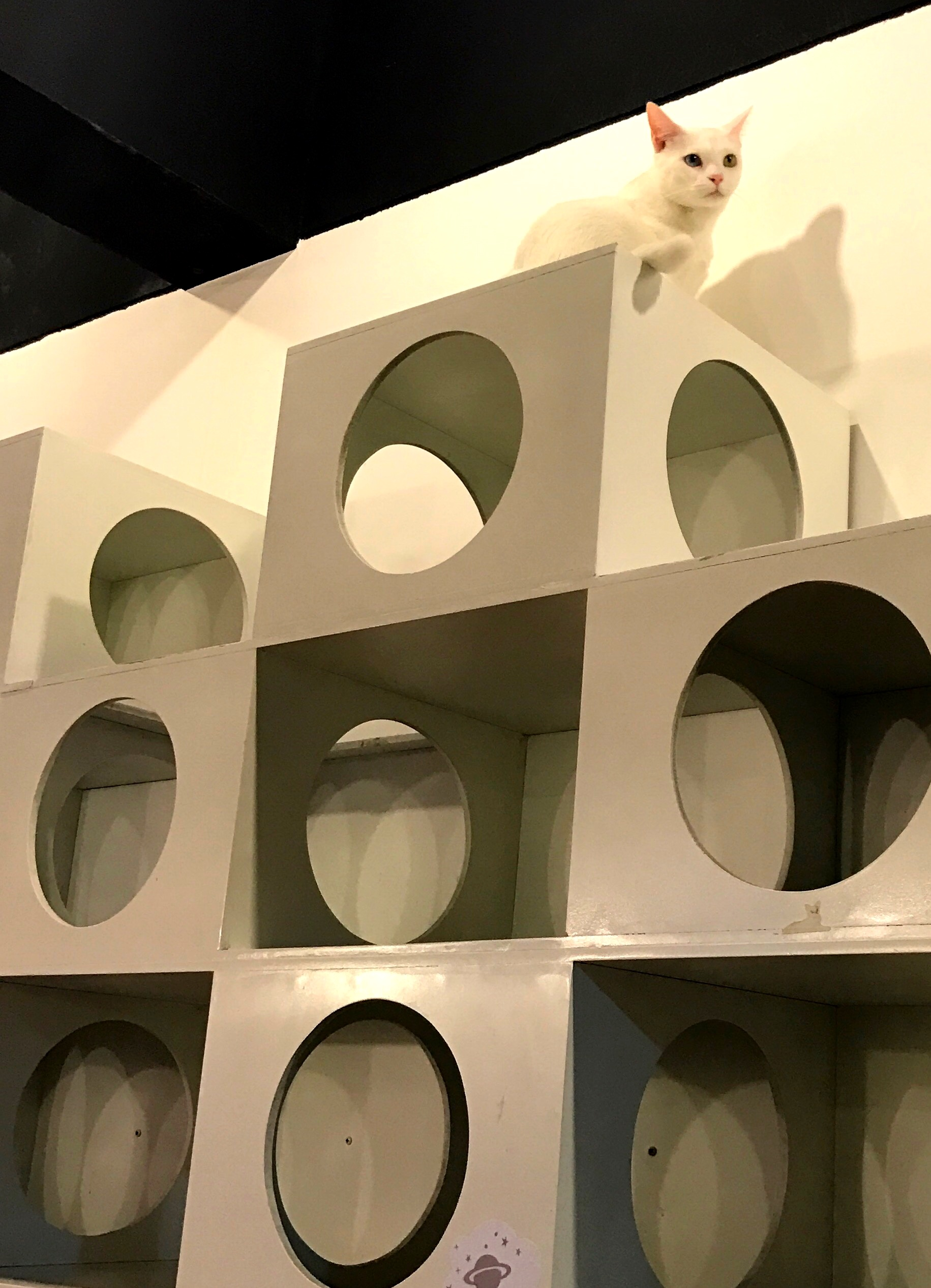 Elsa rules over her domain, a wall of cubby holes