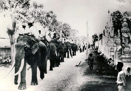 Elephants have always played an important role in Chiang Mai's history, used for transport and as beasts of burden in the teak trade