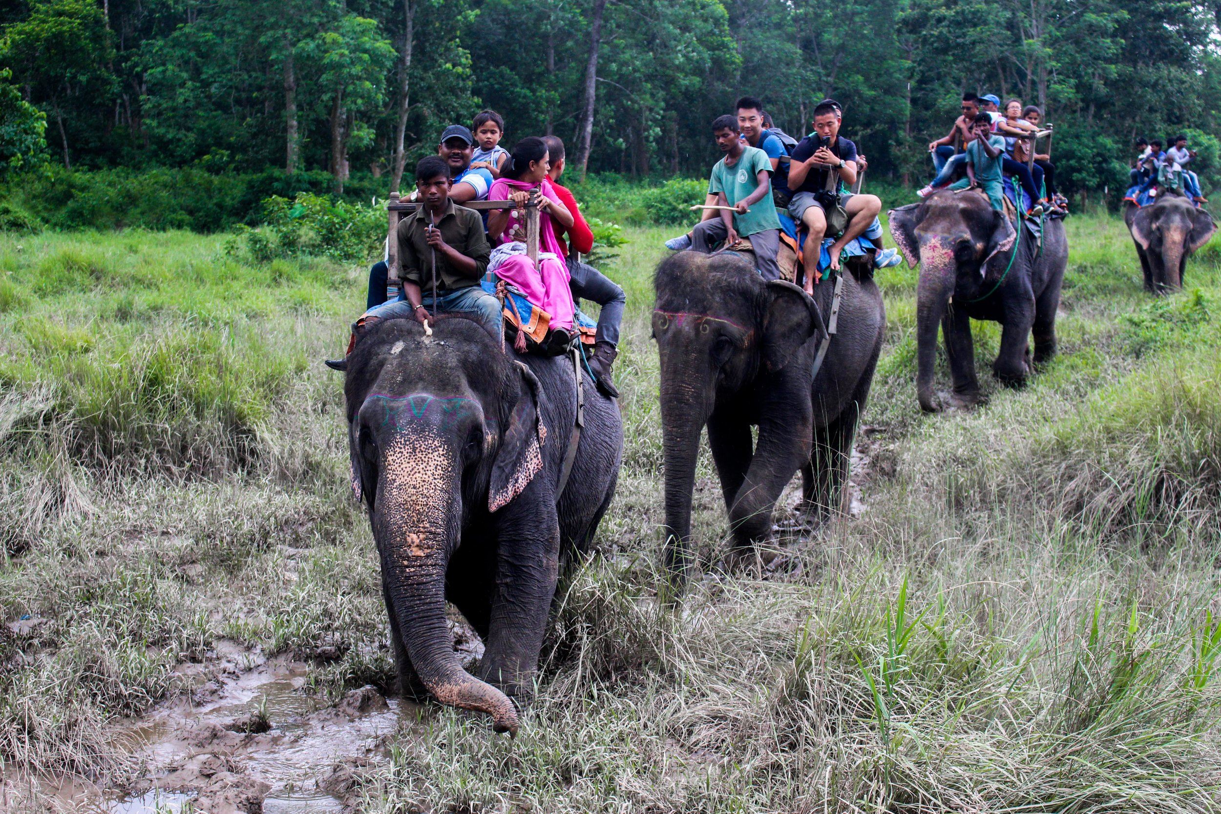 As fun as elephant treks sound, they perpetuate a brutal practice of animal abuse