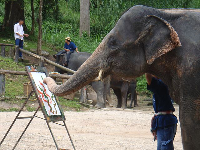 Elephant painting also involves abuse