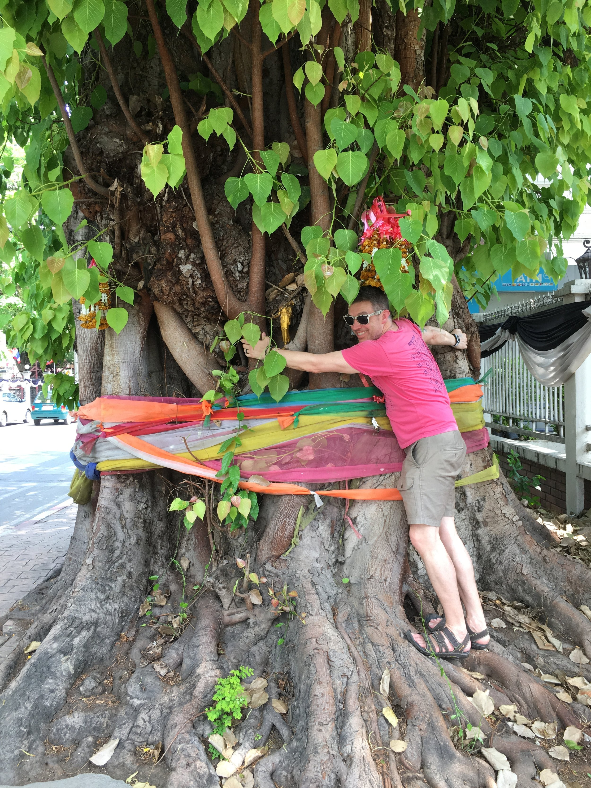 Tree-hugging Wally is part of a long-standing worldwide tradition of worshiping trees