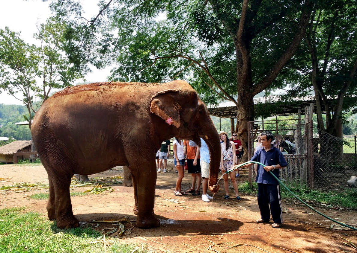 Many of the elephants at the park show signs of their previously abusive lives