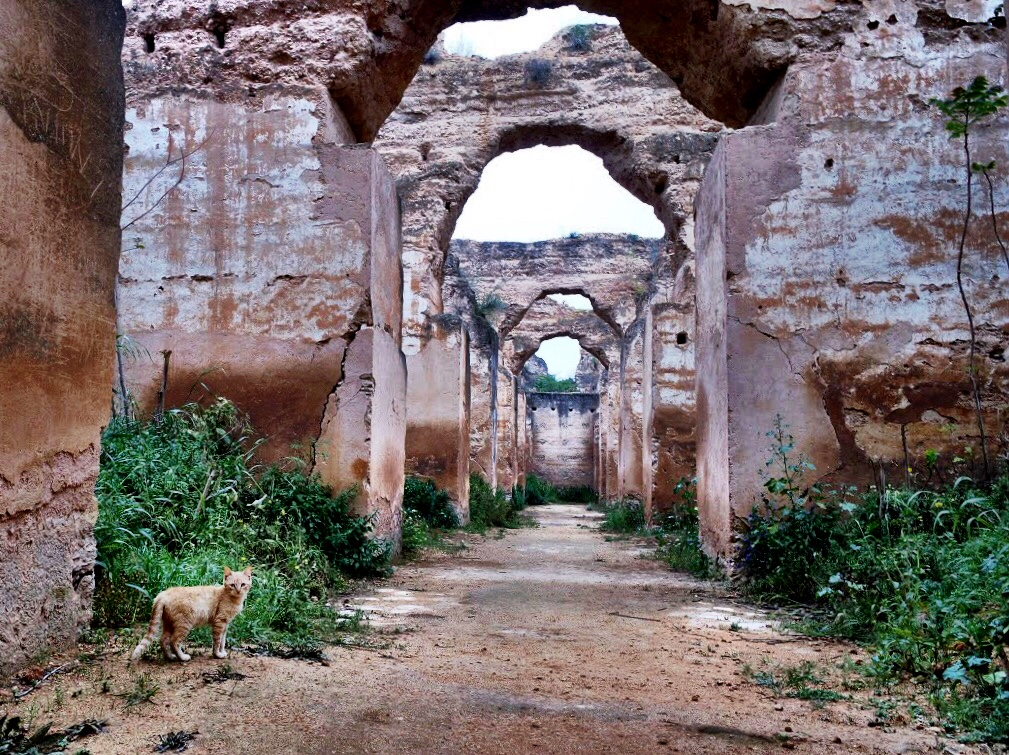 Meknès, with its ruined stables, granary, gate and markets, makes for a fun afternoon after touring the ancient Roman mosaics of Volubilis