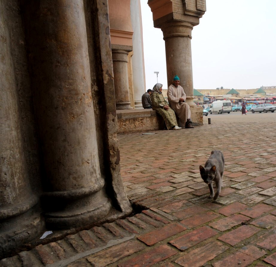 There weren't as many cats in Meknès as there are in Fès and Marrakech, much to Duke and Wally's dismay