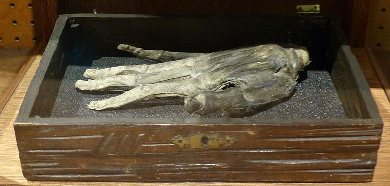This desiccated body part is said to be a genuine Hand of Glory