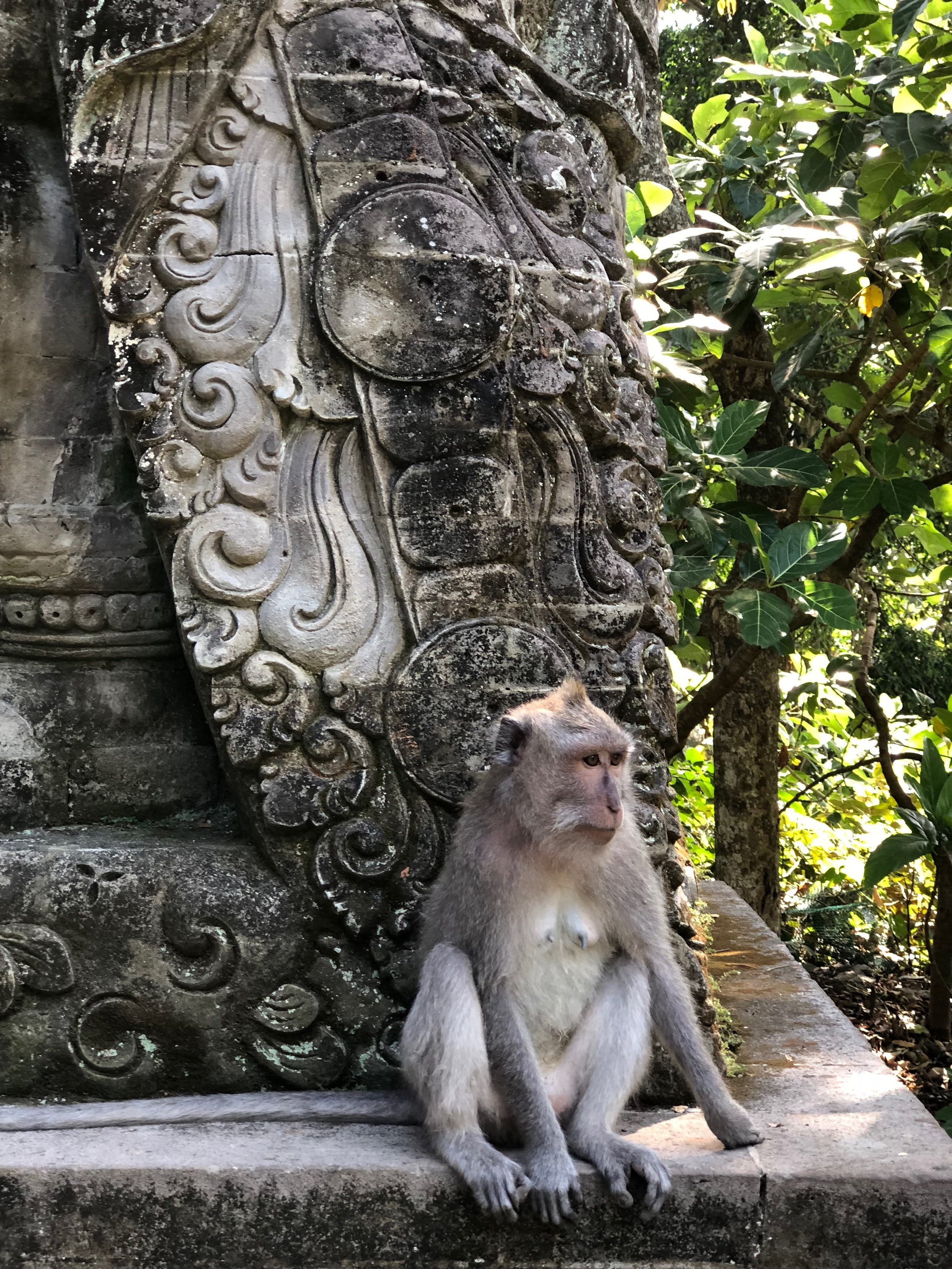 Gorgeous stonework and mischievous macaques abound in the Monkey Forest