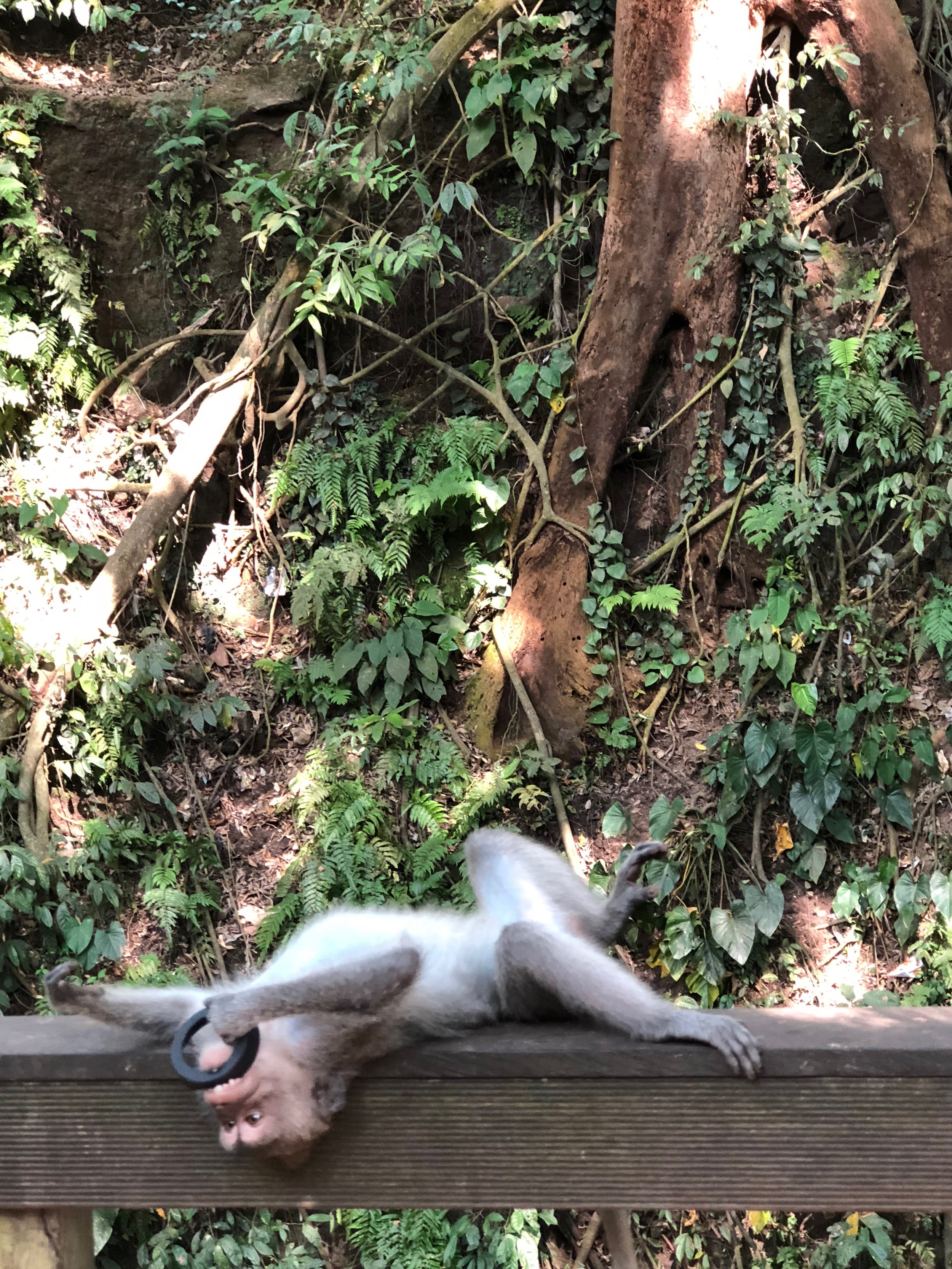 Down the path to the right is a landing where monkeys strike a pose
