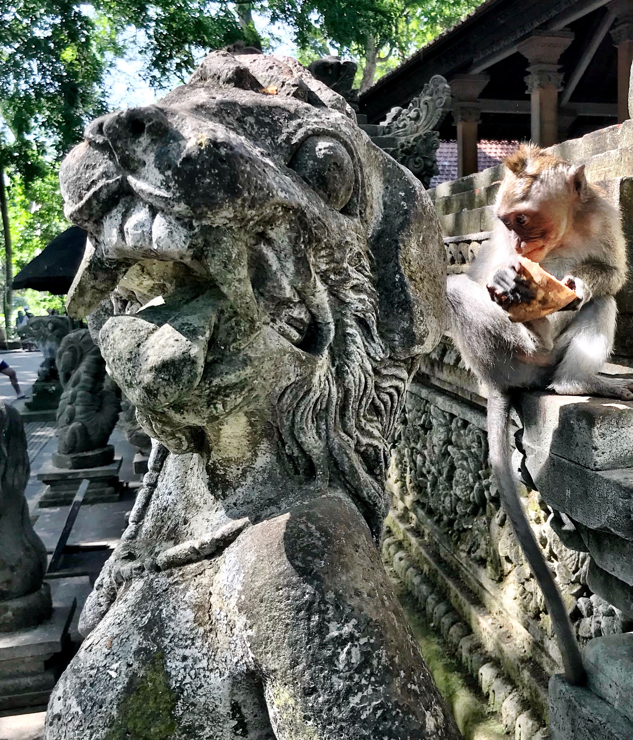 This little macaque was hanging out on the temple entrance