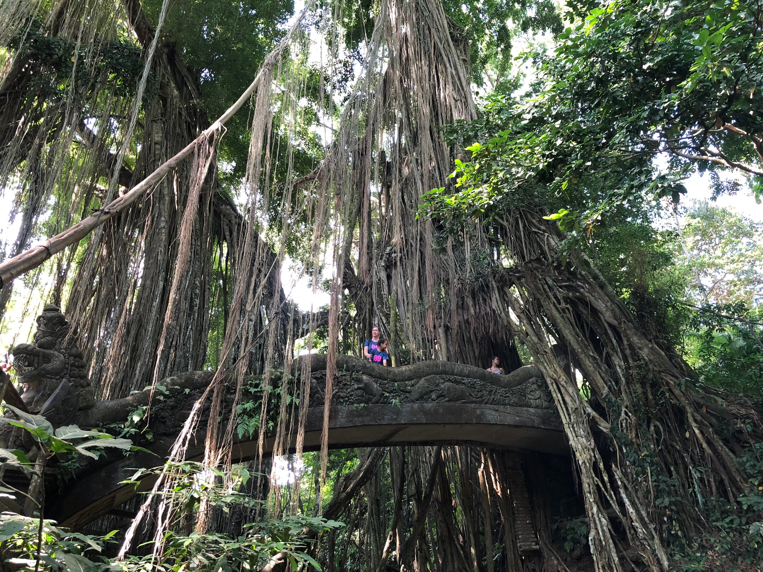 Banyan roots have taken over parts of the sanctuary