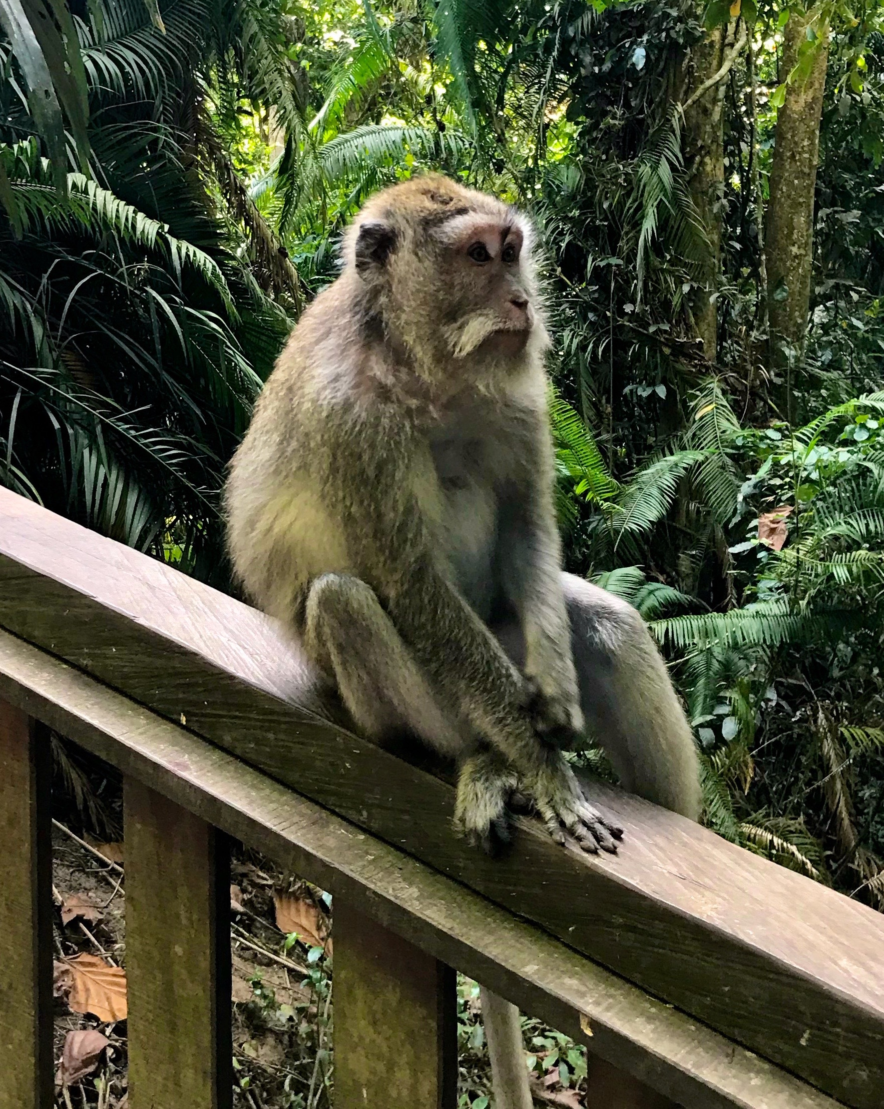 According to the park, there are about 600 monkeys in the area!