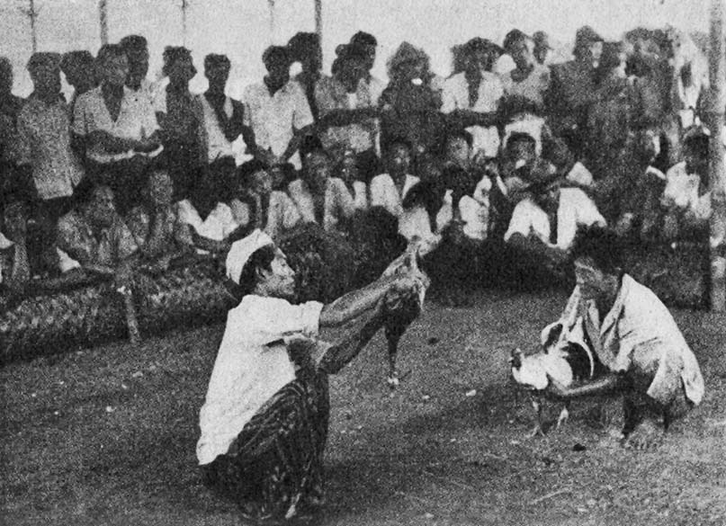 A Balinese cockfight from the late 1950s