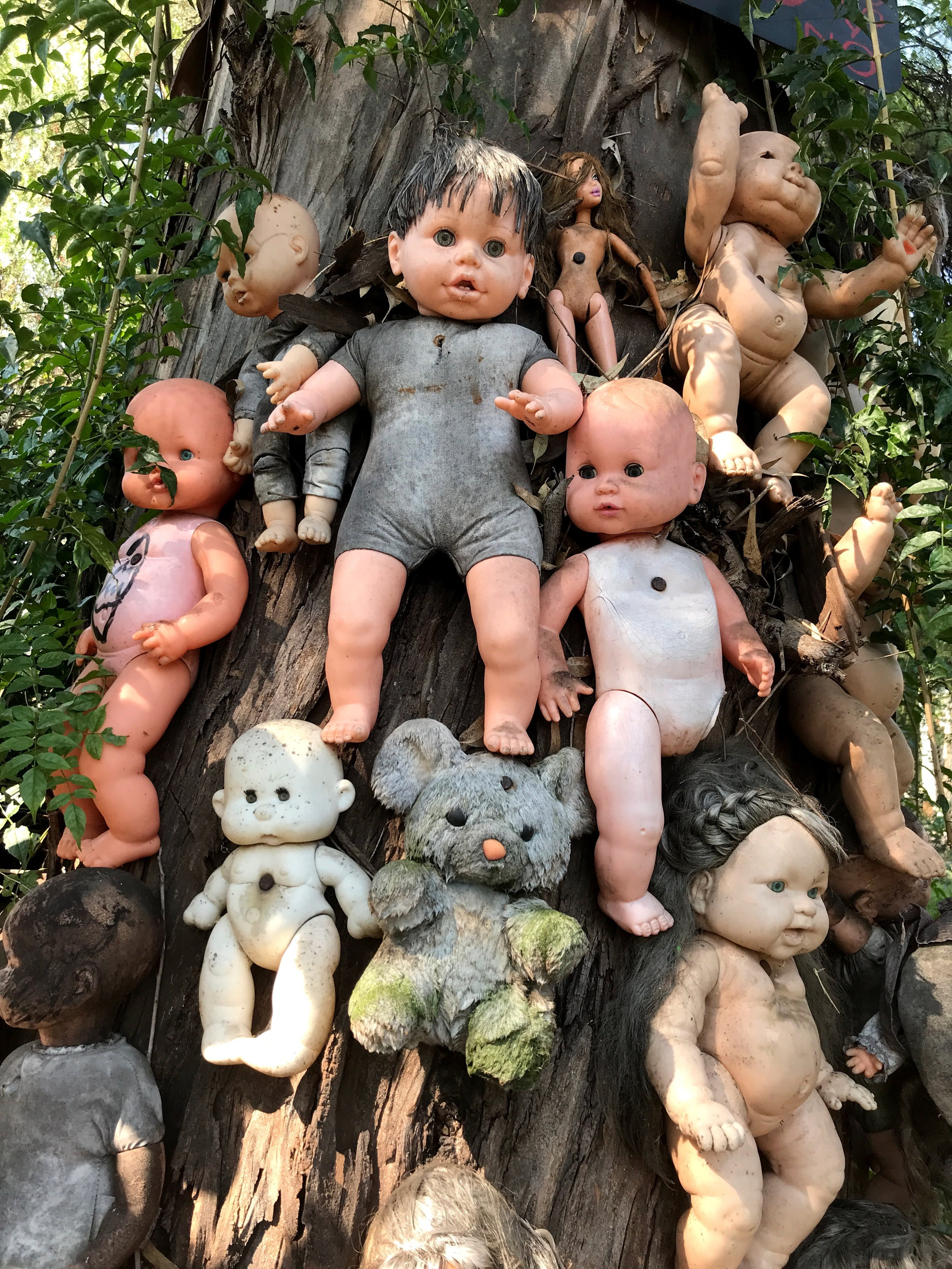 These dolls have been nailed to a tree, creating a macabre tableau