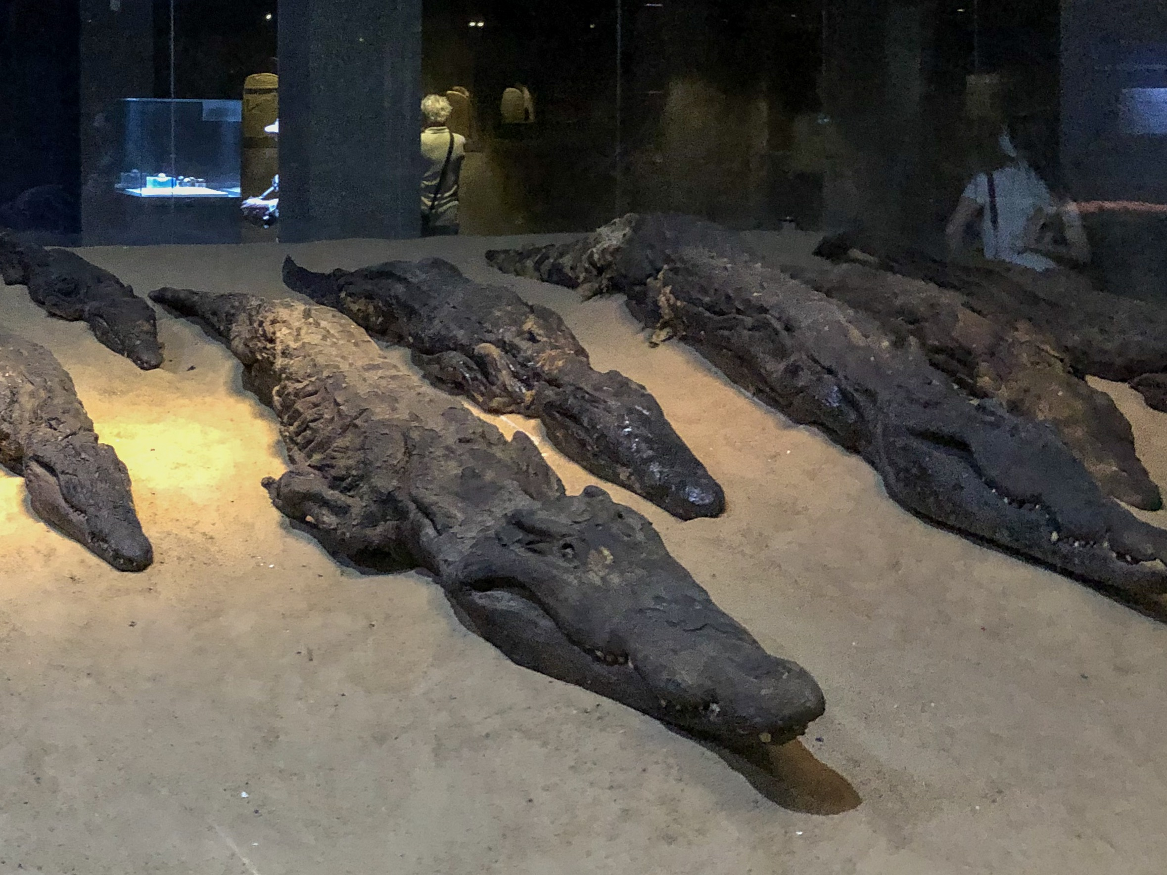 Be sure to see the mummified crocs after wandering the ruins of Kom Ombo. Mummies like these were put into tombs so the ferocious beasts could protect the dead in the afterlife