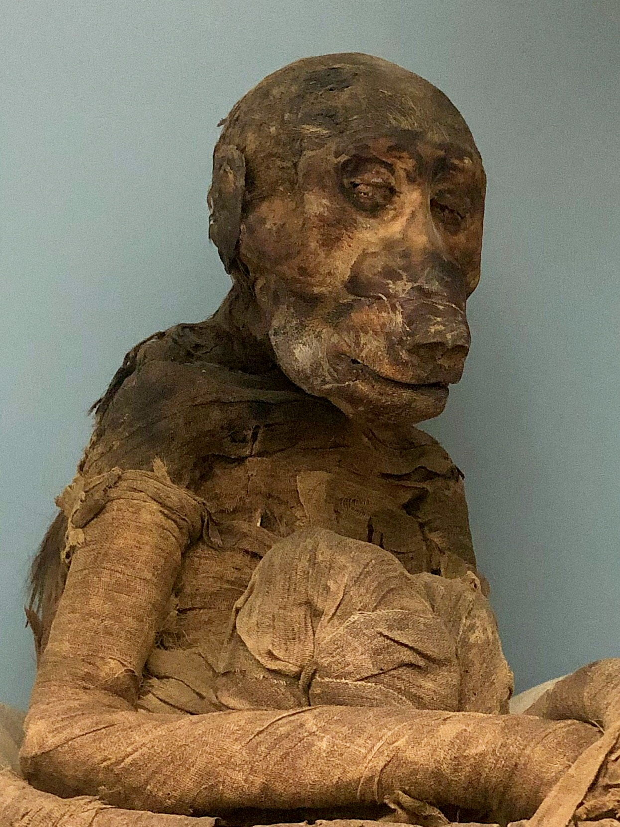 One wing of the Egyptian Museum in Cairo contains animal mummies like this baboon