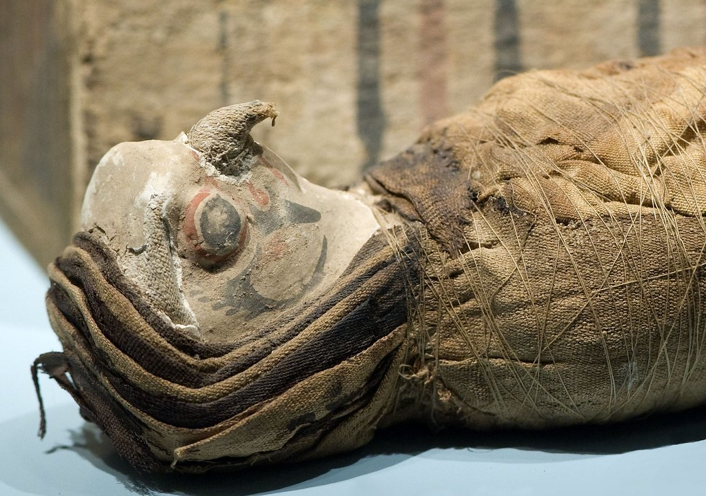This falcon mummy was a cult animal or an offering to a deity like Horus