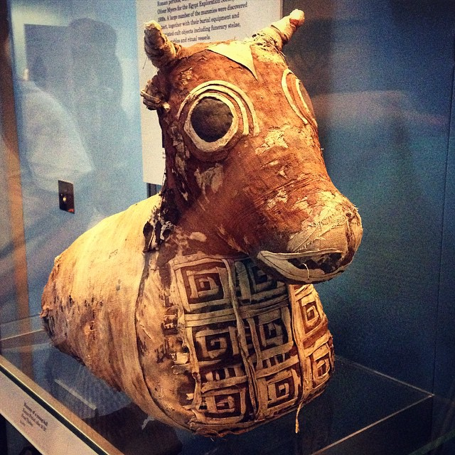 Turpentine enemas and linen butt plugs were involved in the time-consuming process to make a bull mummy