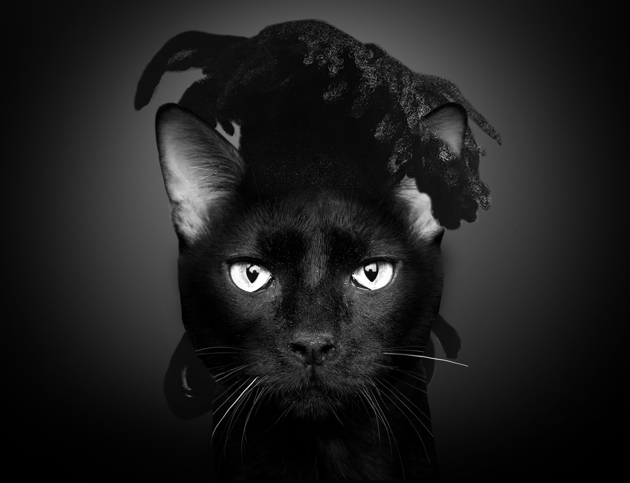 WEEKEND CAT.jpg