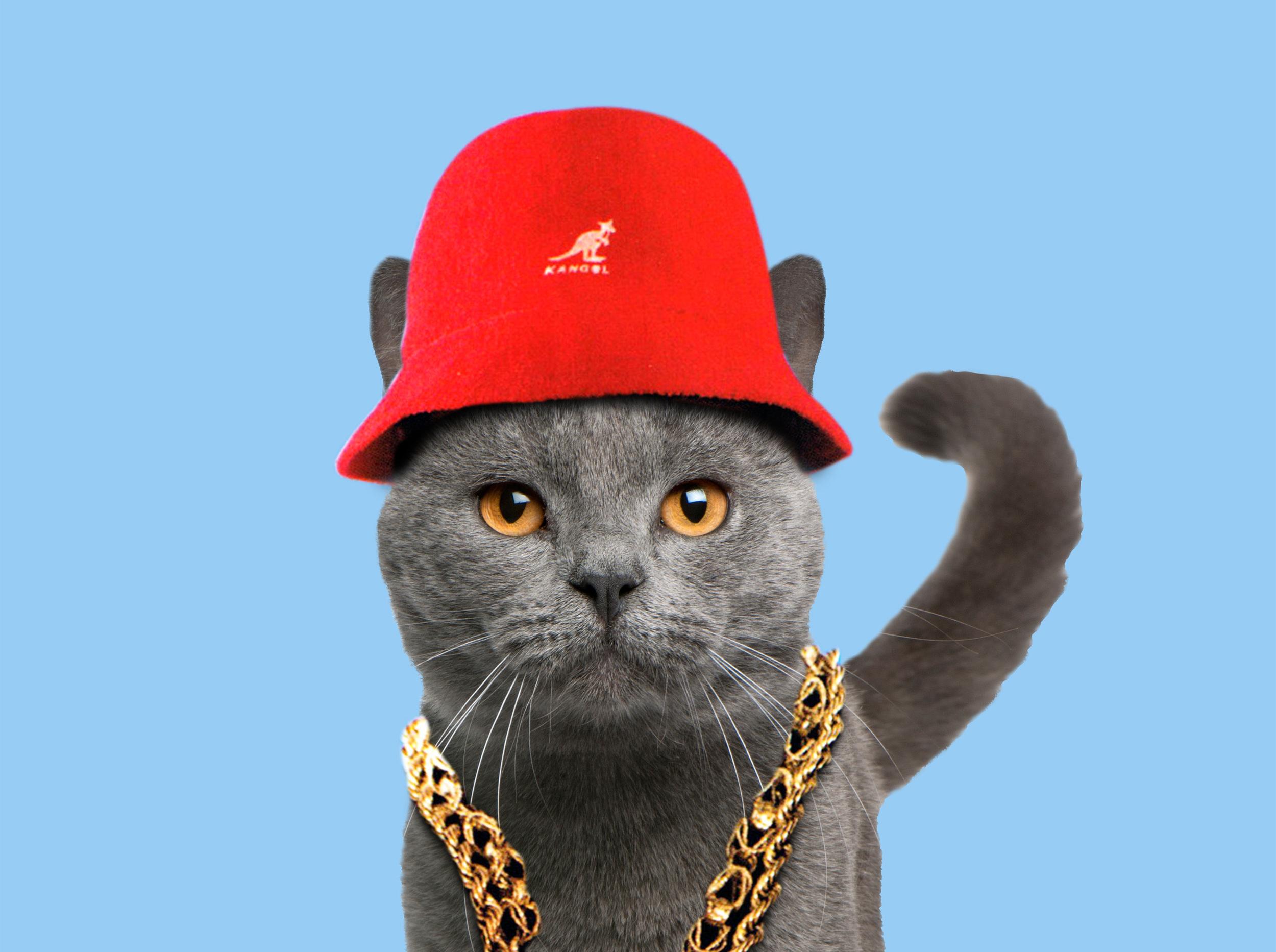 LL COOL J CAT.jpg