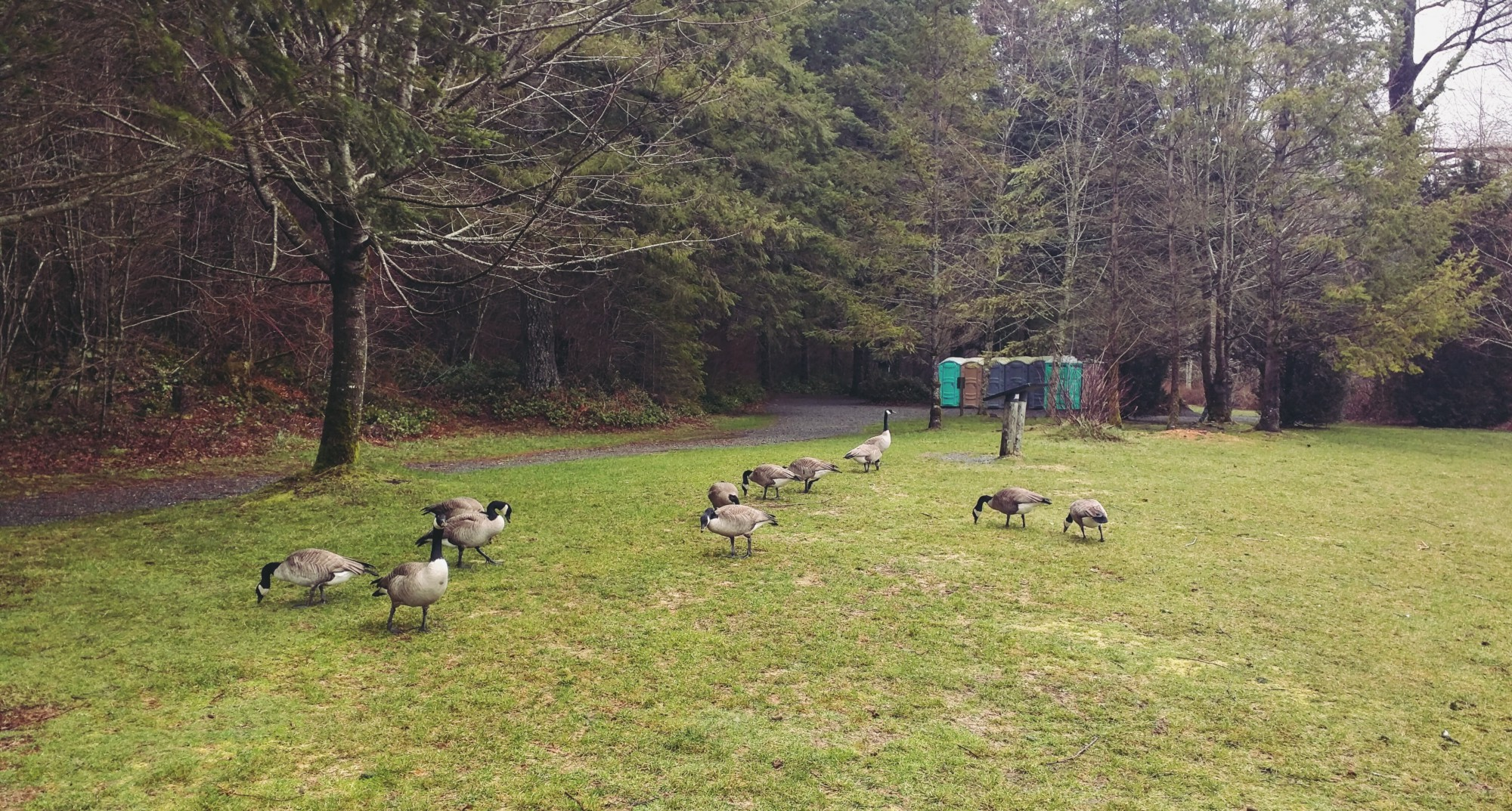 The geese didn't mind us too much