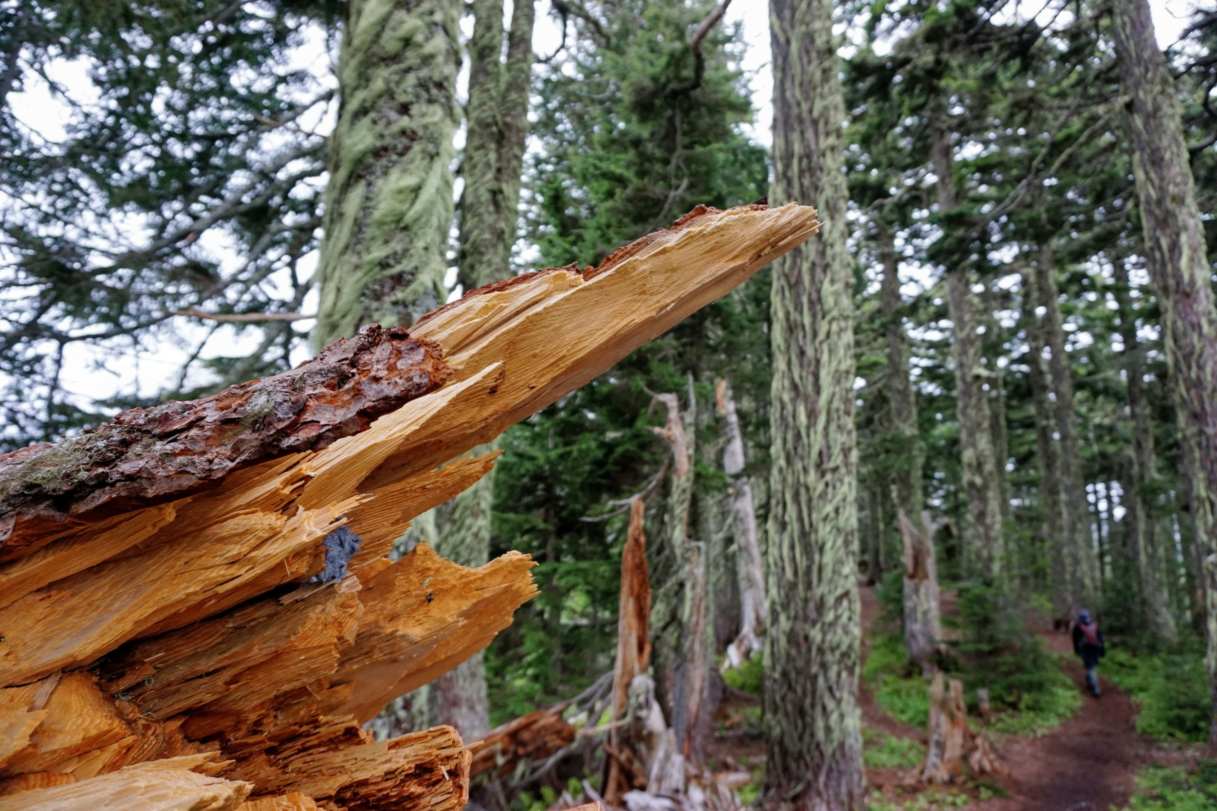 Downed Trees at Summit Lake