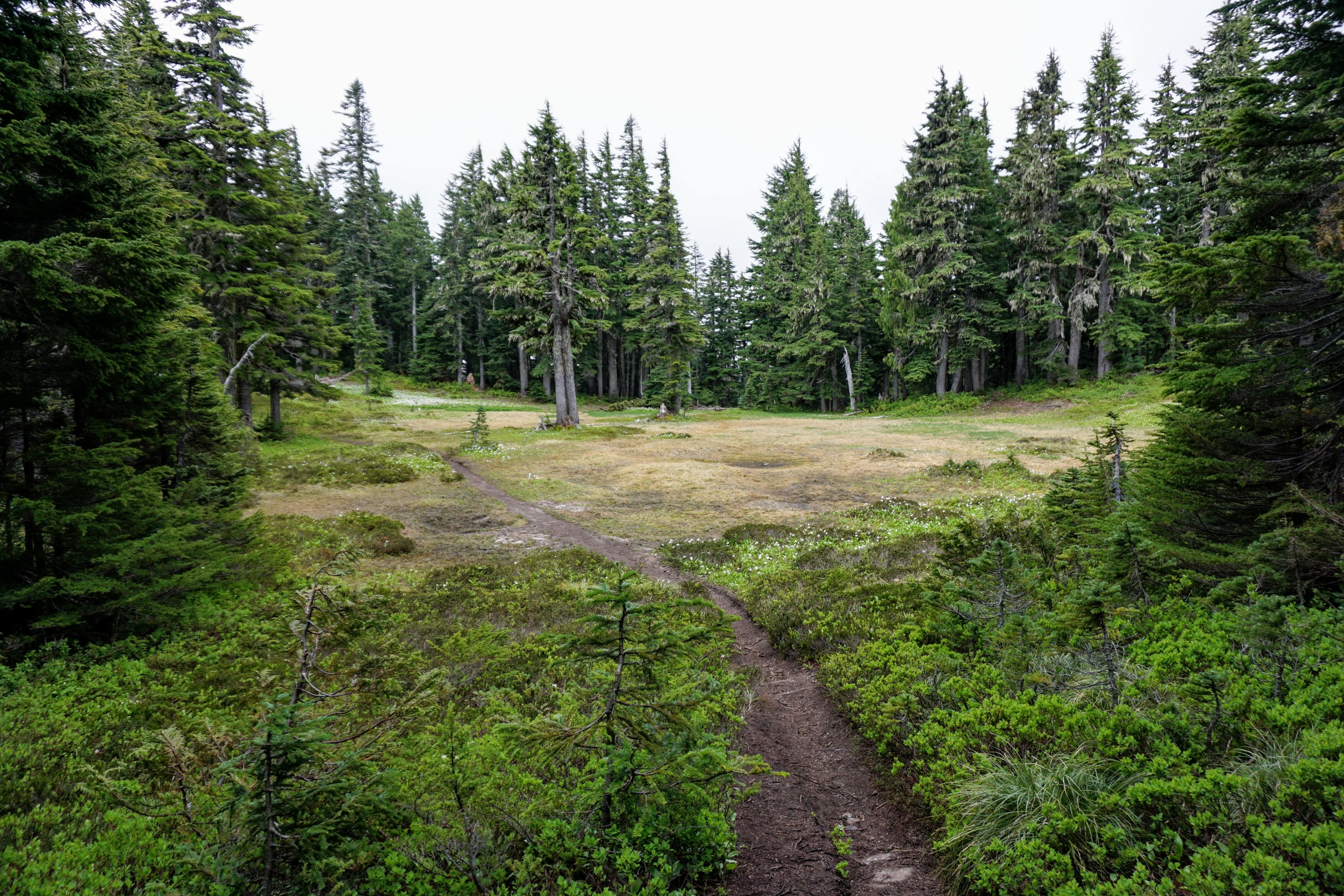 Summit Lake Trail Leading to Meadow