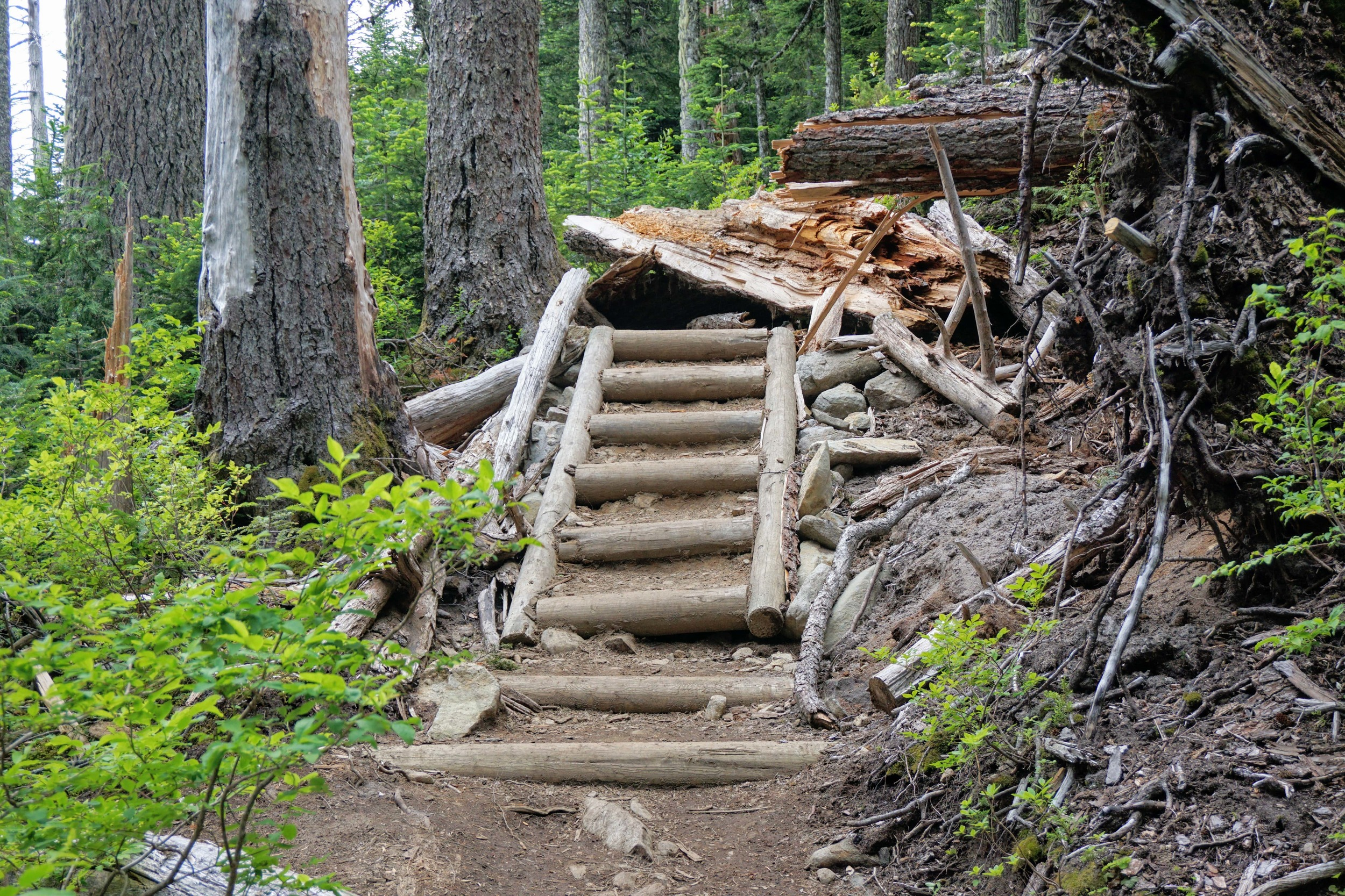 Stairs on Summit Lake Trail