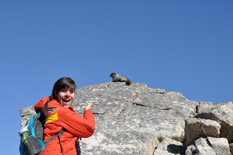 Maple Pass Marmot
