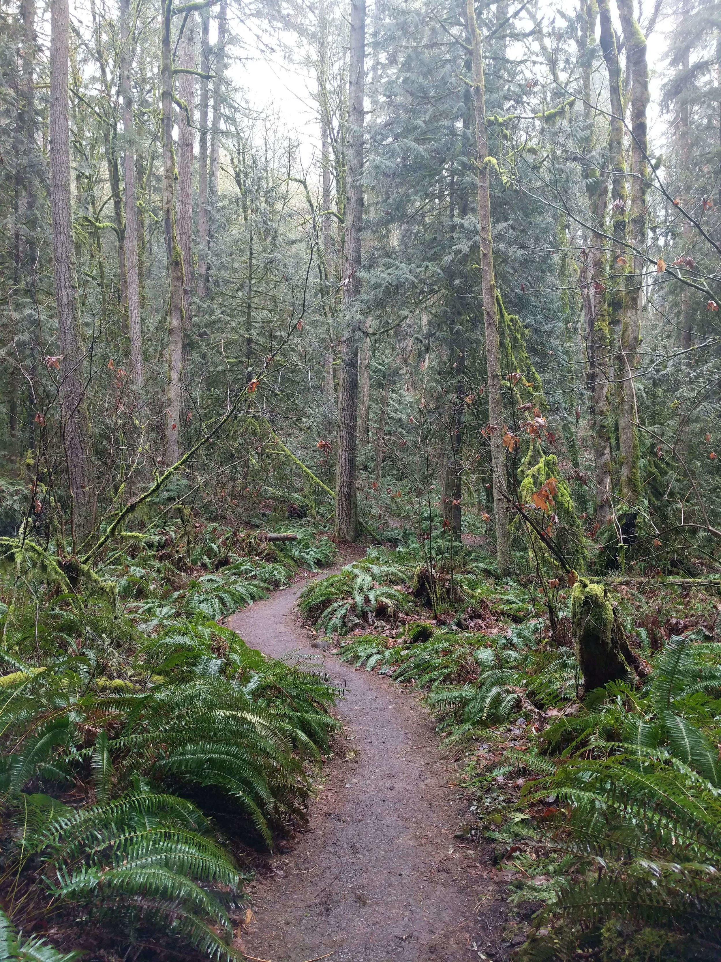 Squak Mountain State Park 13 - Pacific North Wanderers.jpg