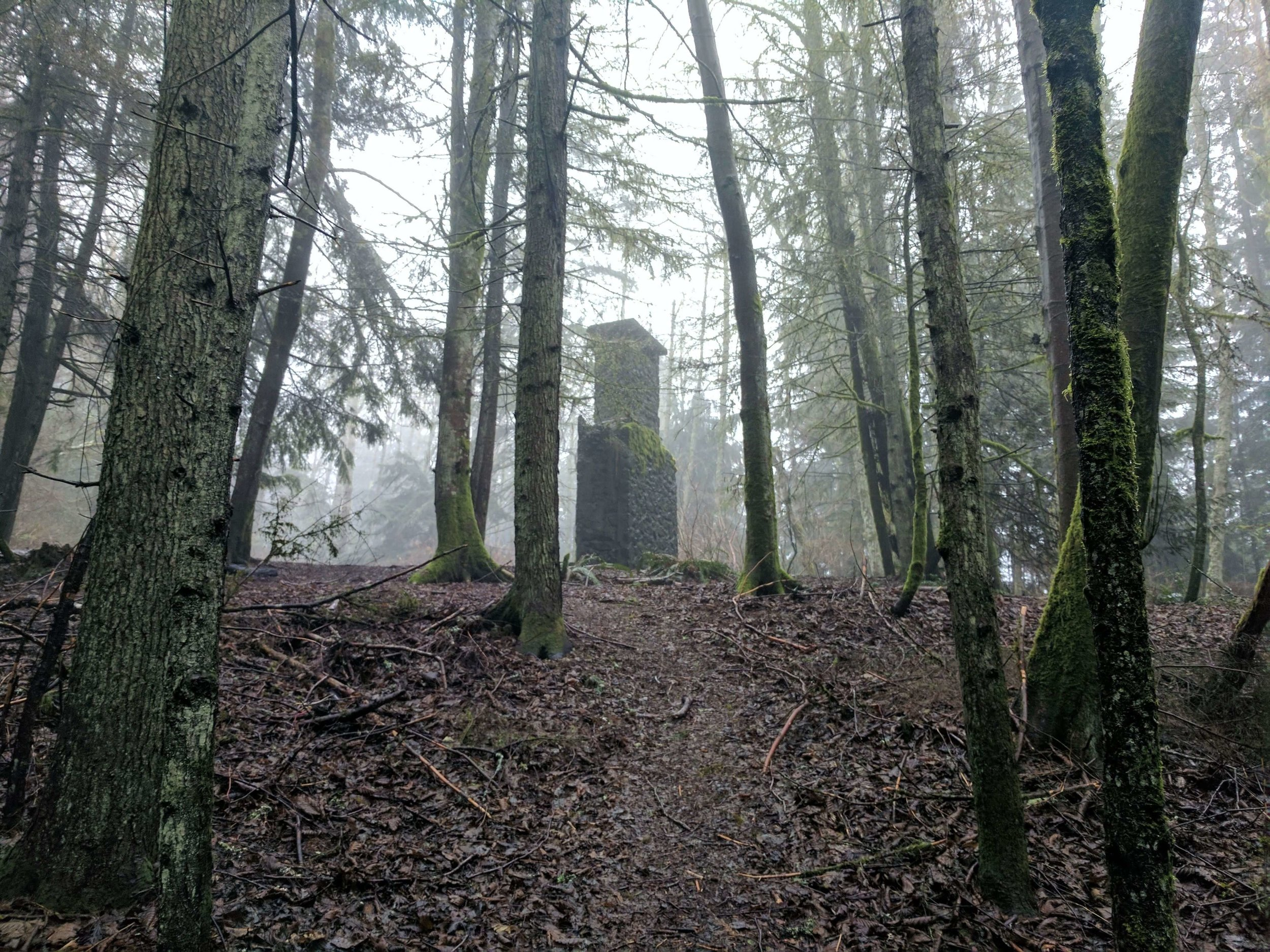 Squak Mountain State Park 07 - Pacific North Wanderers.jpg
