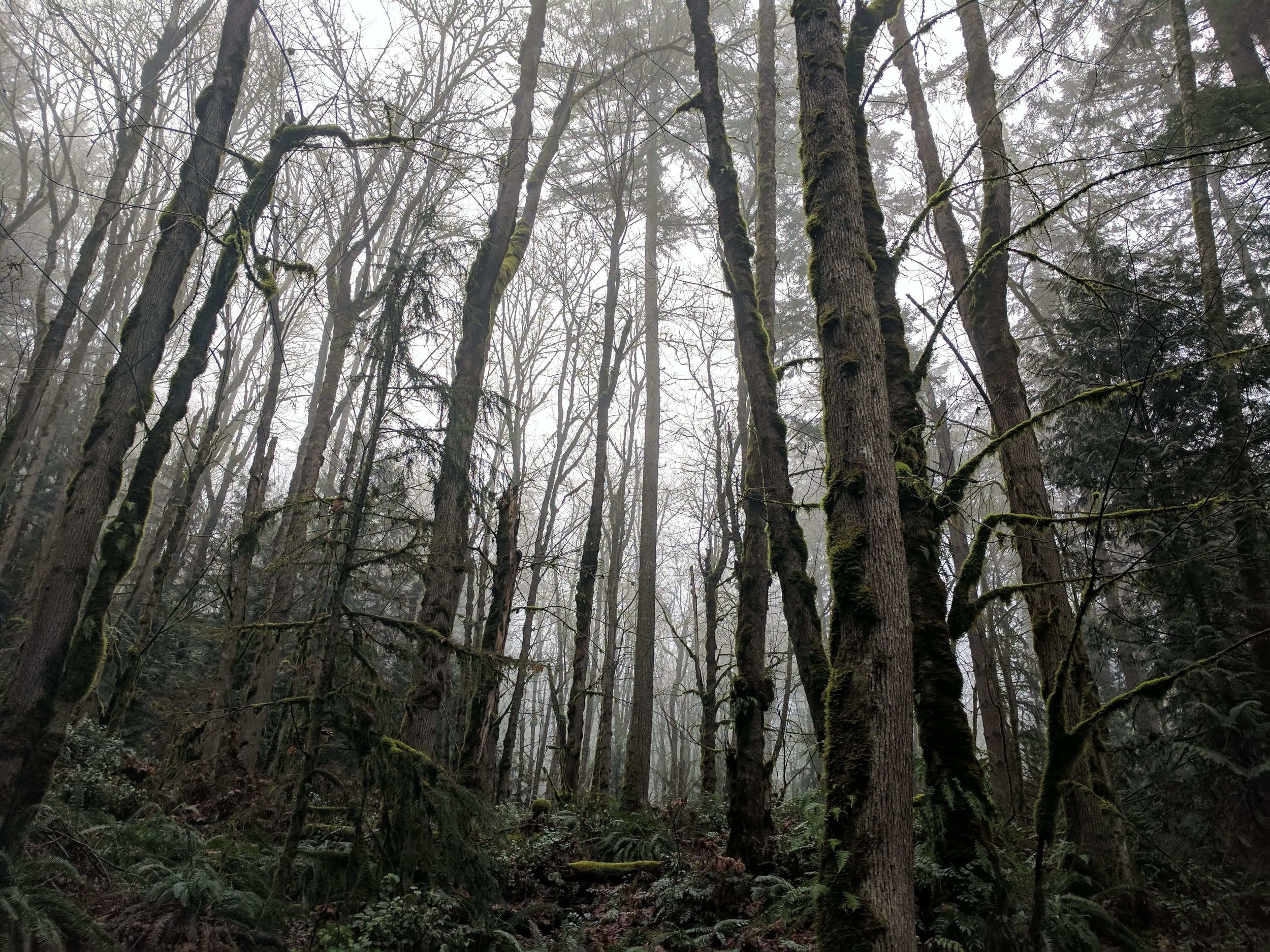Squak Mountain State Park 12 - Pacific North Wanderers.jpg
