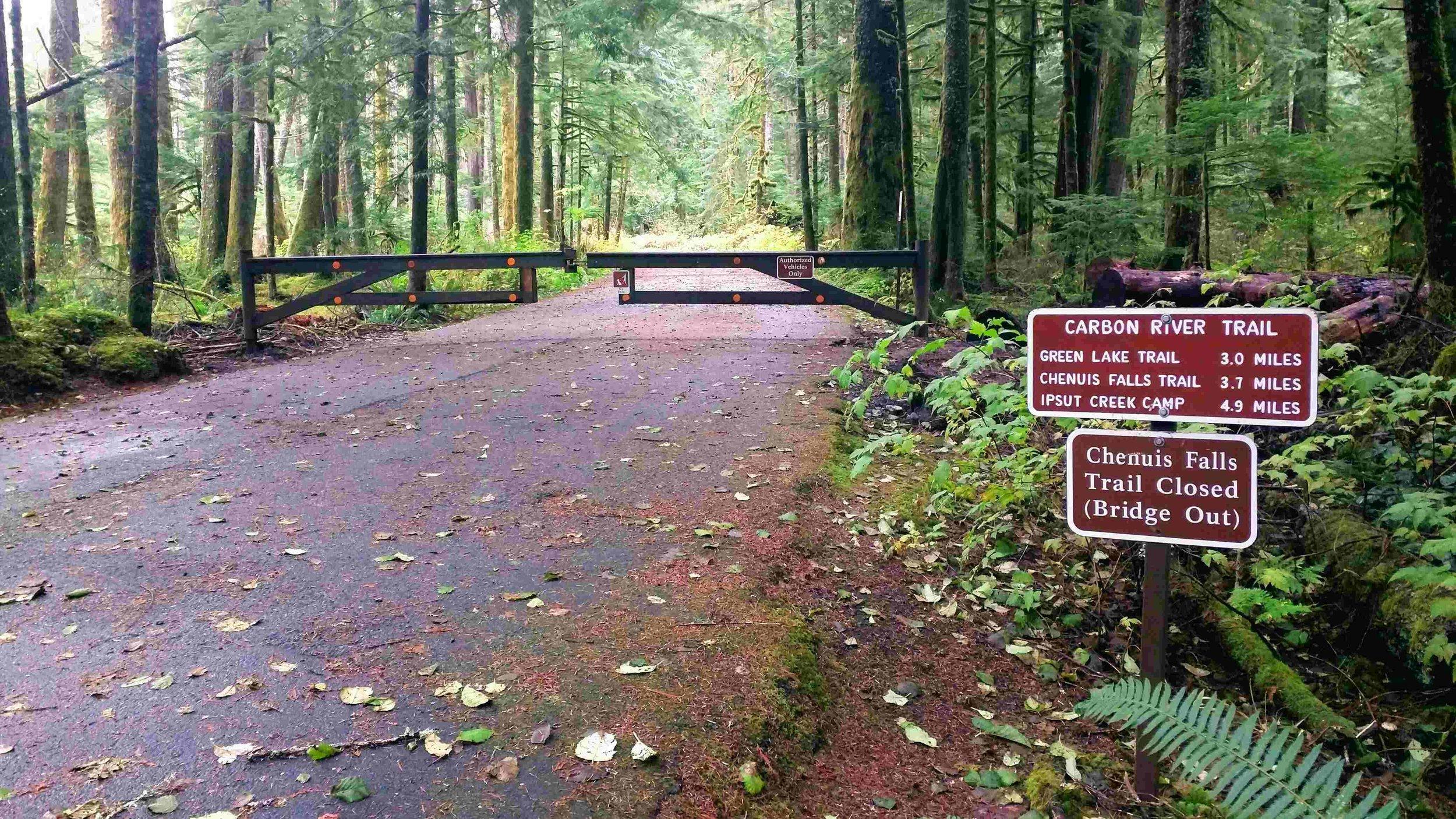 Carbon River Road in Mount Rainier National Park
