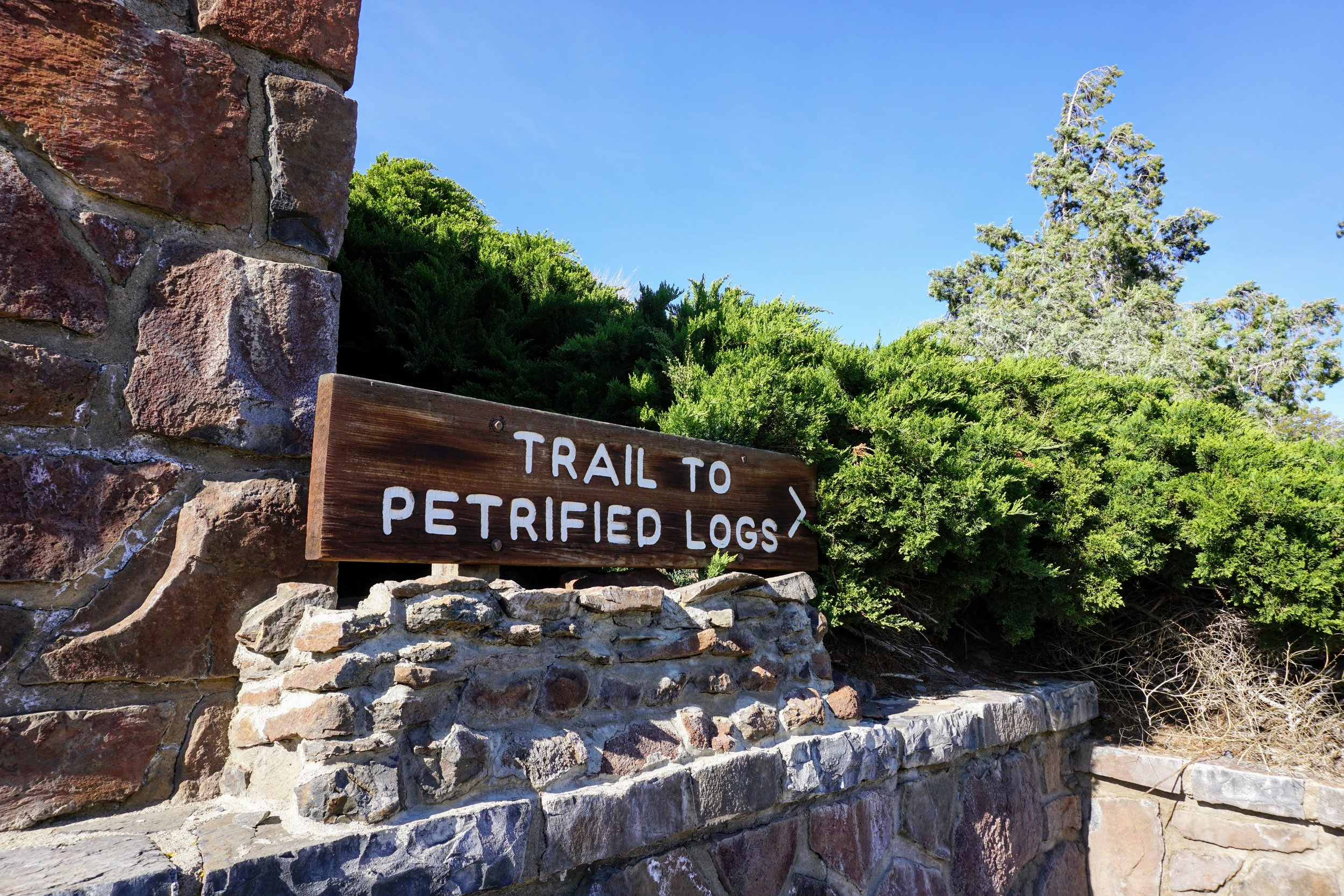 Trees of Stone Trail at Ginkgo Petrified Forest State Park