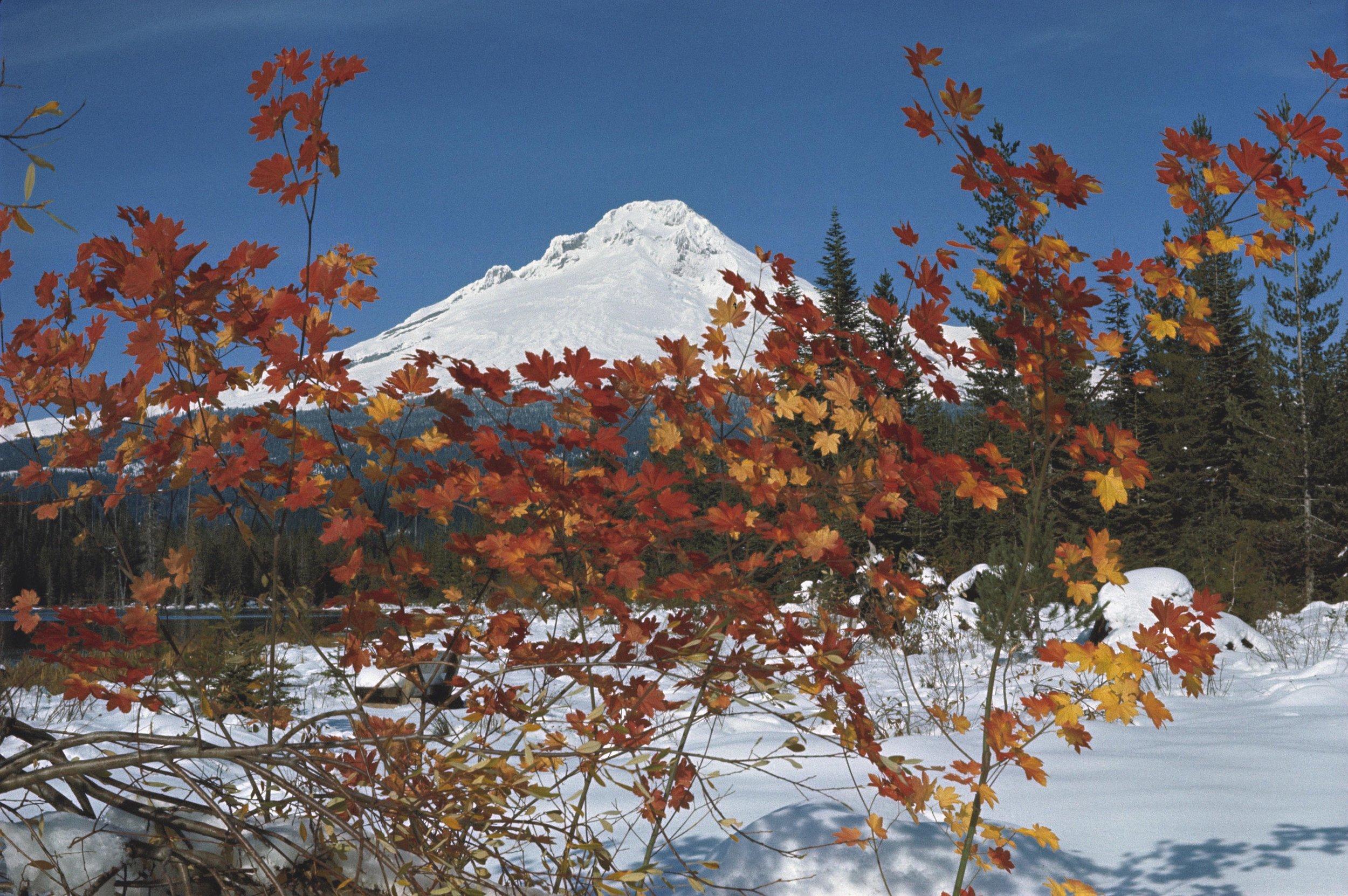 Mount Hood. Photo credit:    Wikimedia Commons