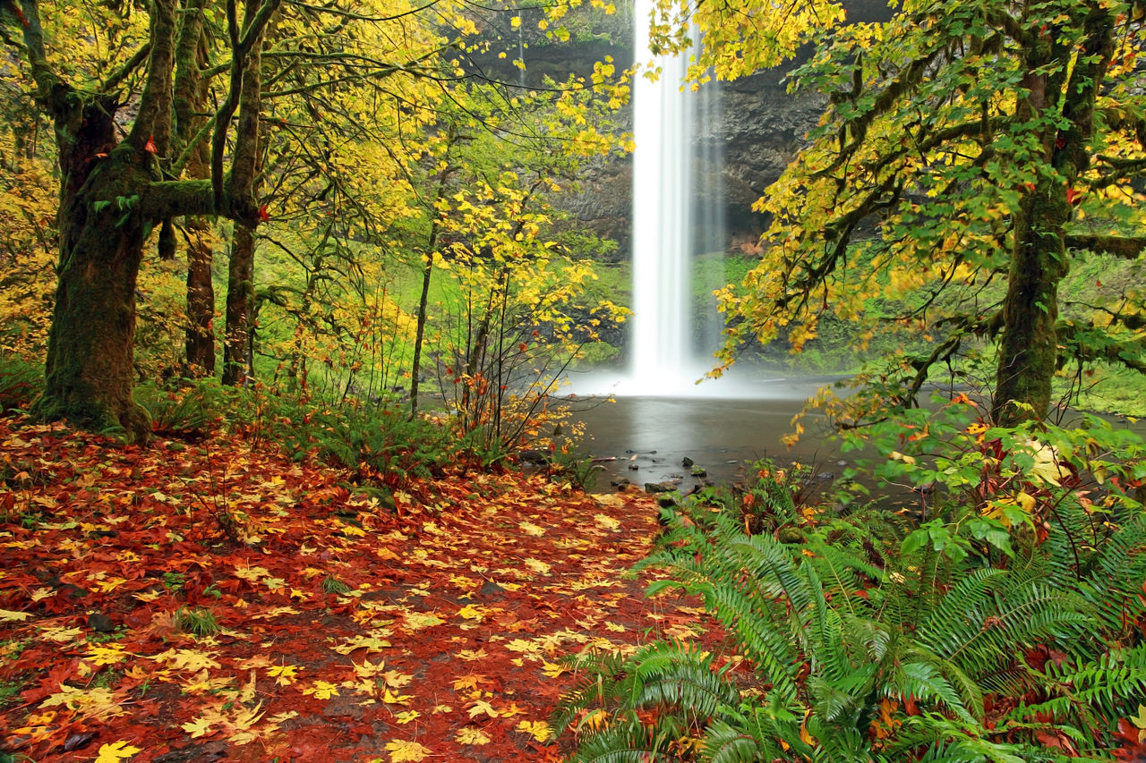 Dream Pool at Silver Falls State Park. Photo credit:    Wikimedia Commons
