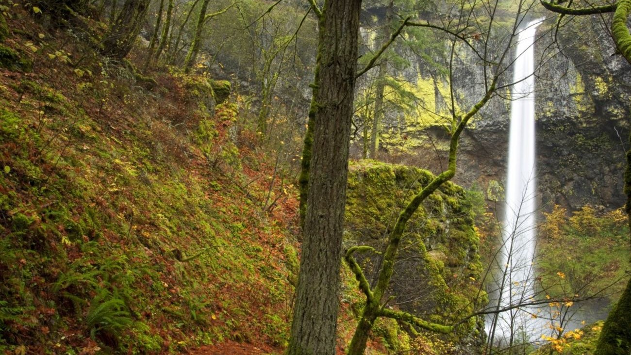 Autumn in Columbia River Gorge. Photo credit: Creative Commons