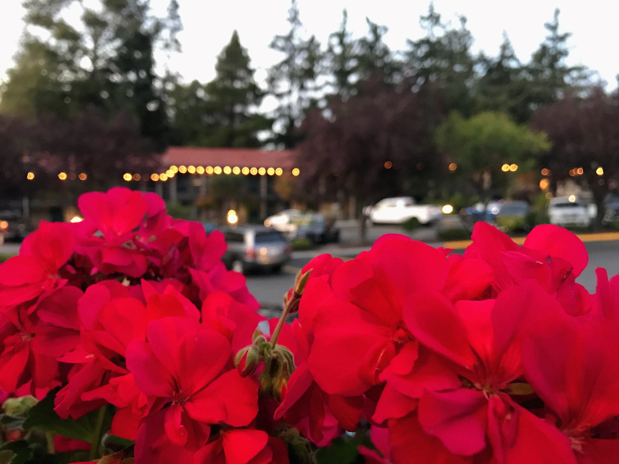 Flowers at The Coachman Inn
