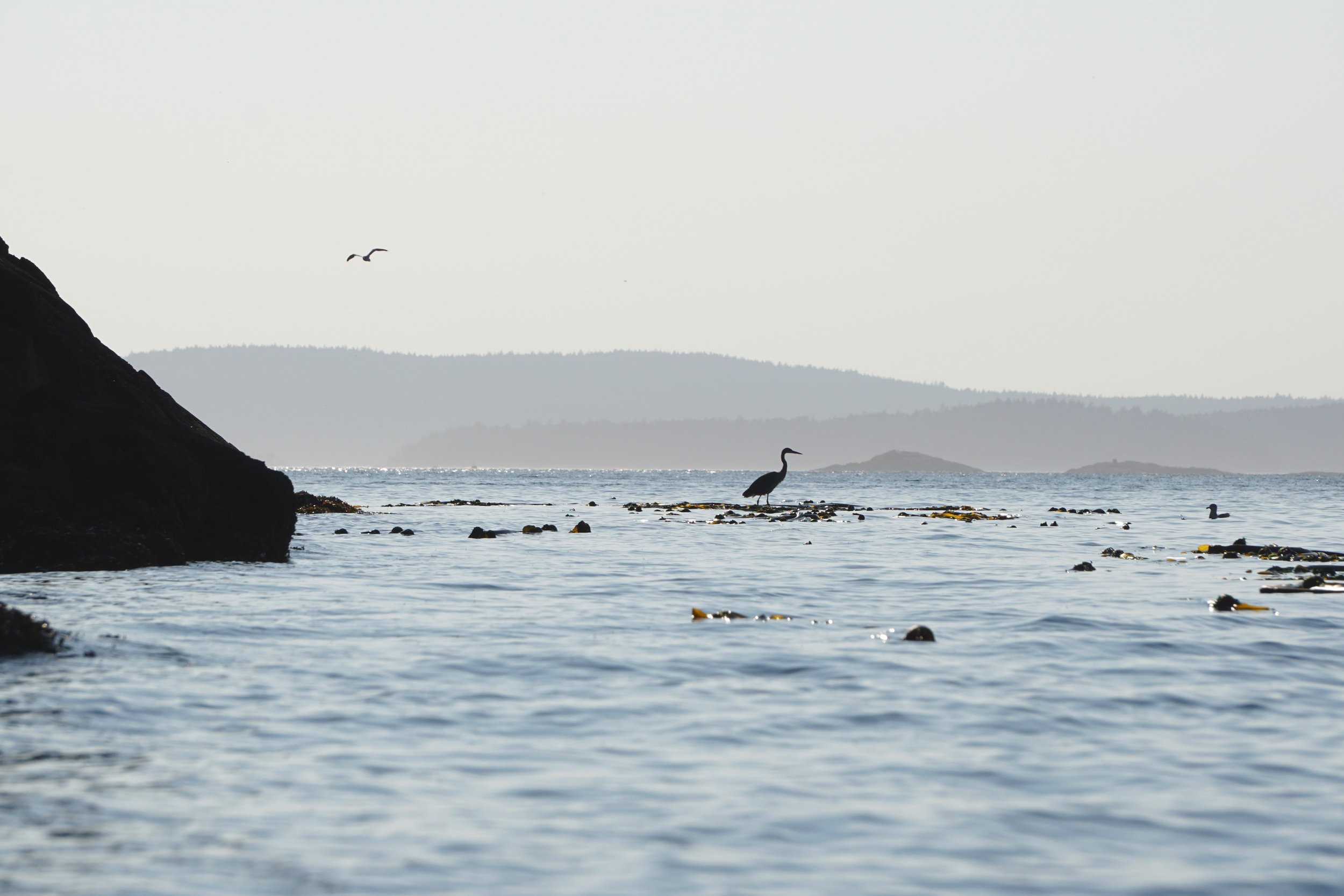 Heron spotted while kayaking