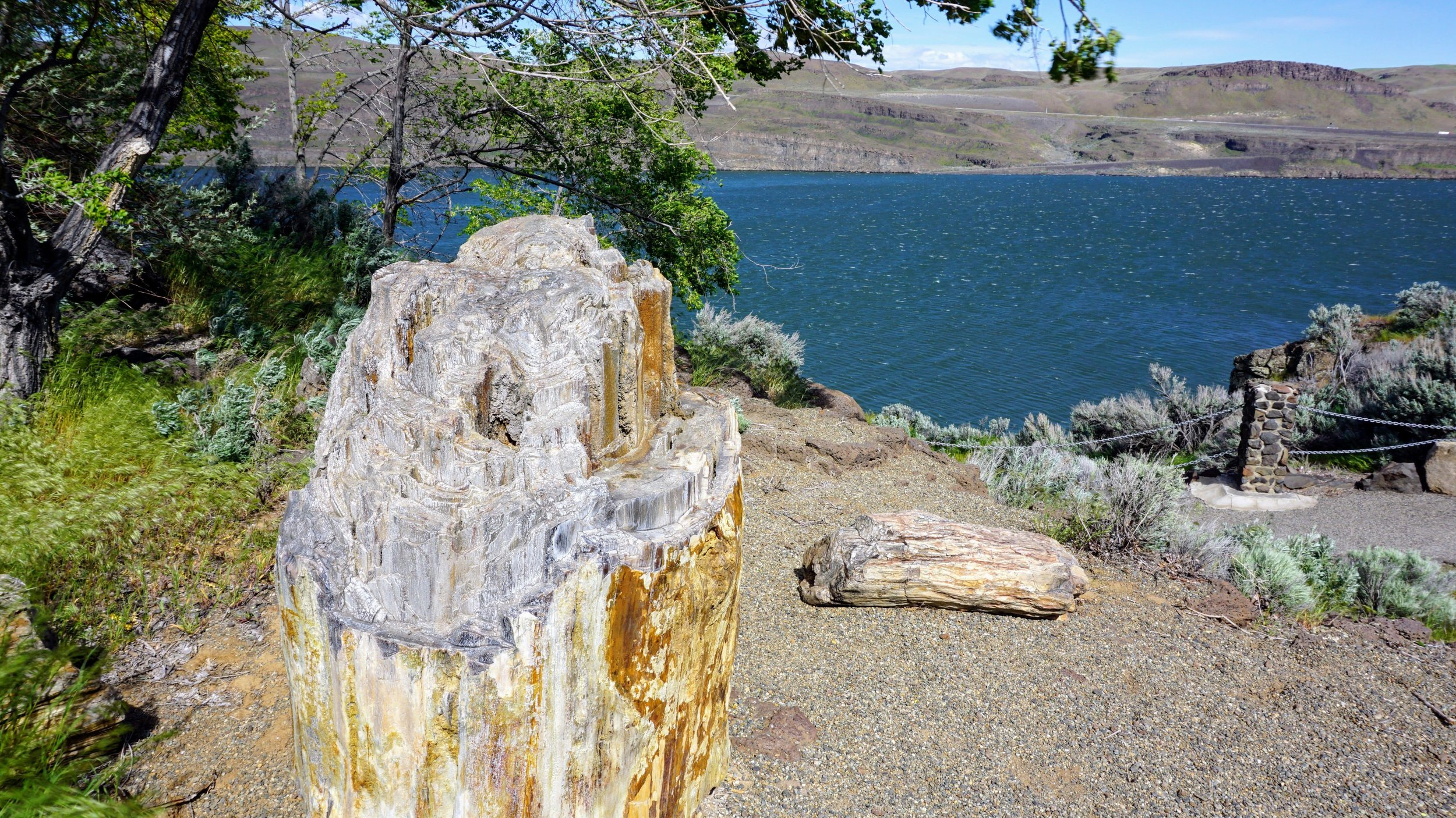 Ginkgo Petrified Forest State Park - Pacific North Wanderers.jpg