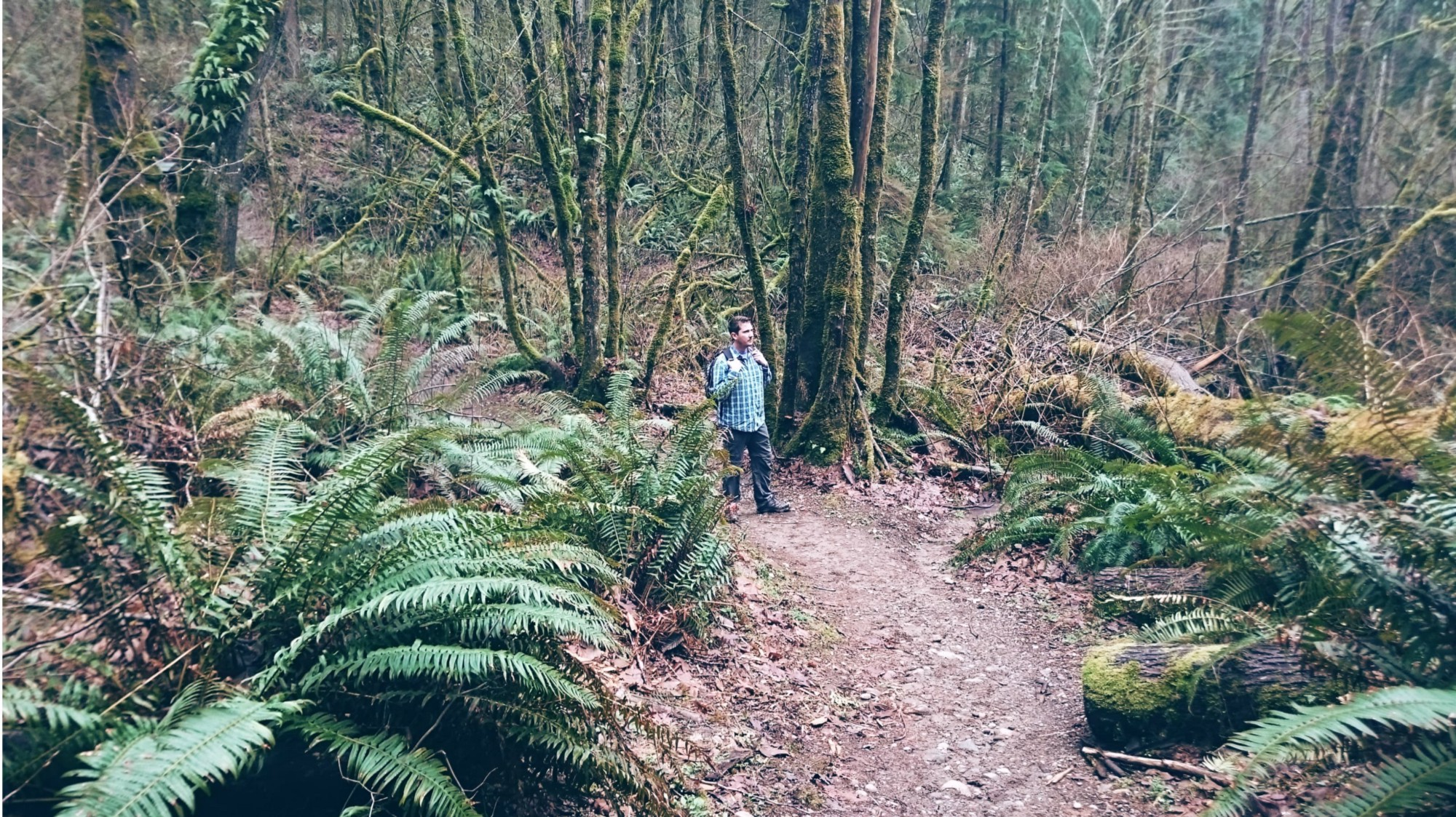 Cougar Mountain - Pacific North Wanderers.jpg
