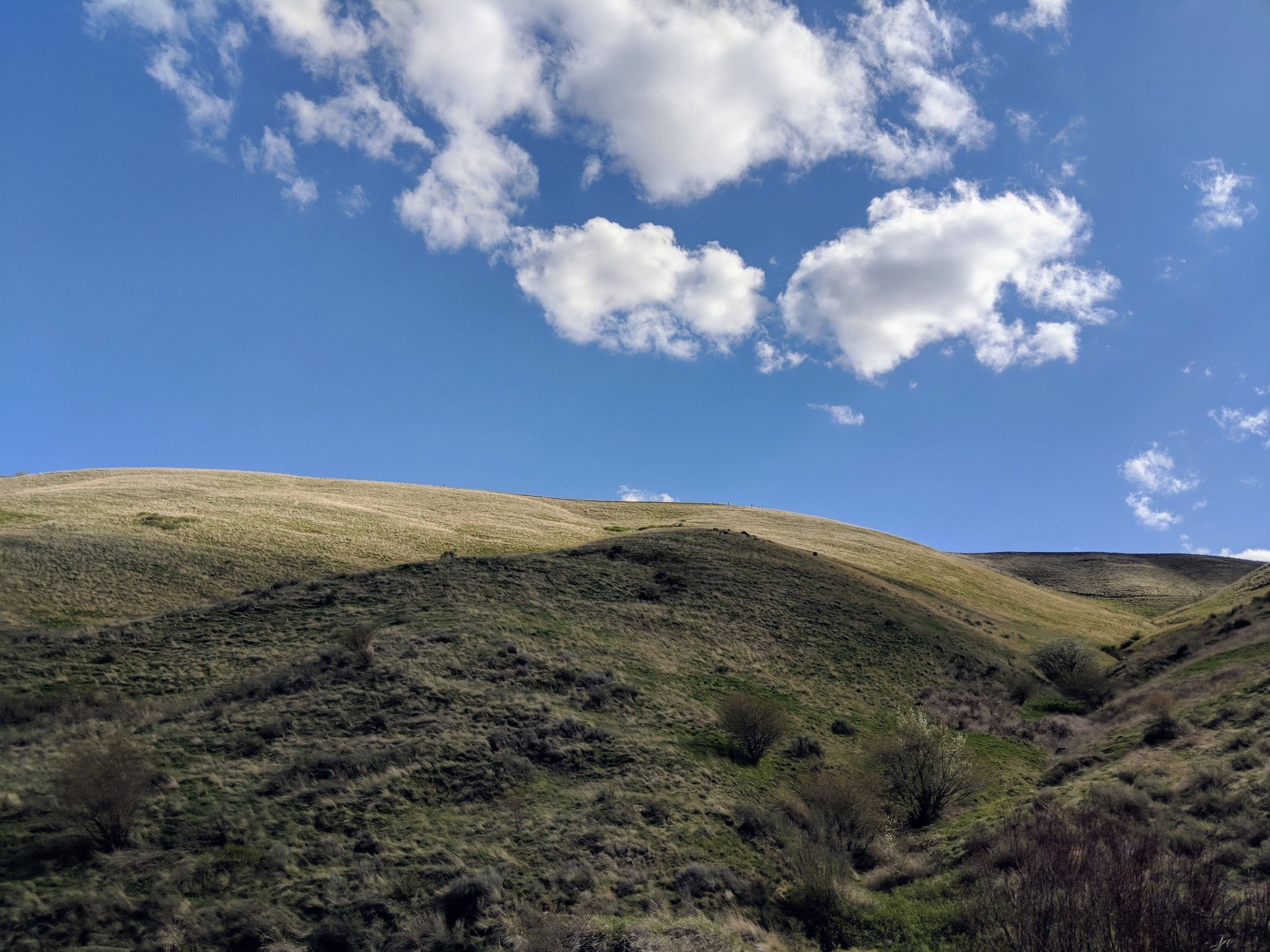 Rolling Hills - Pacific North Wanderers.jpg