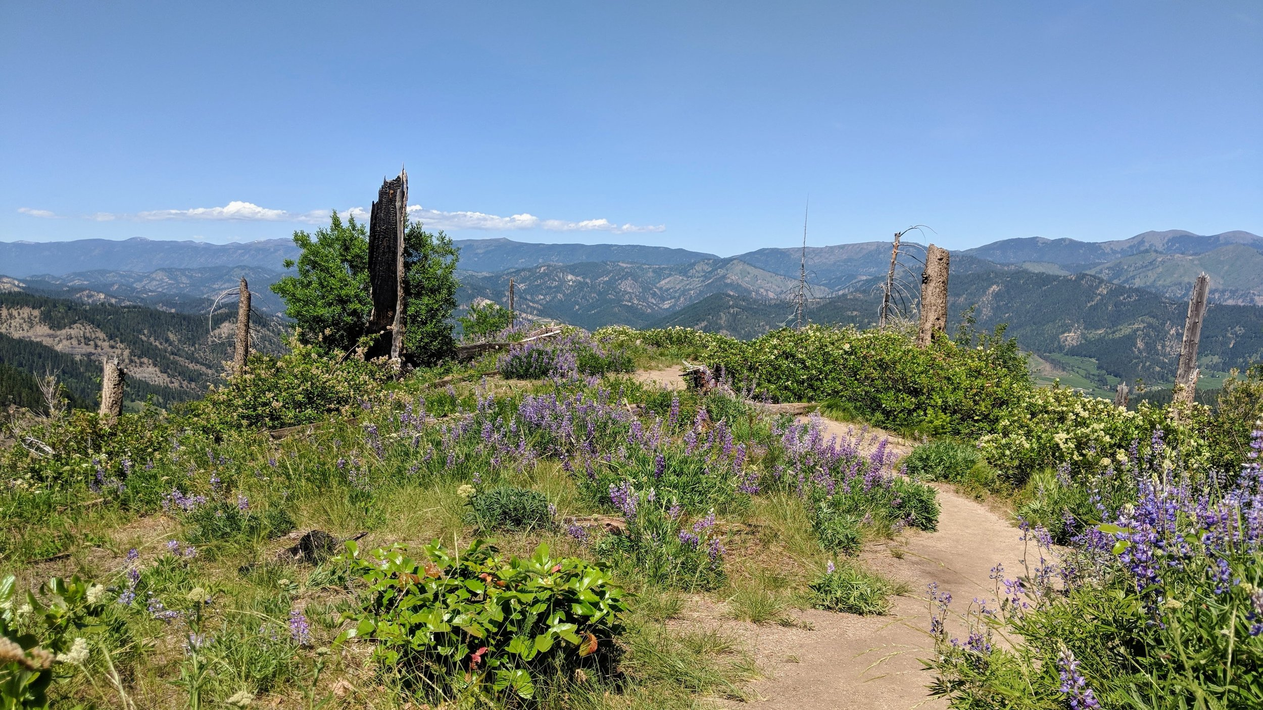 View from Icicle Ridge