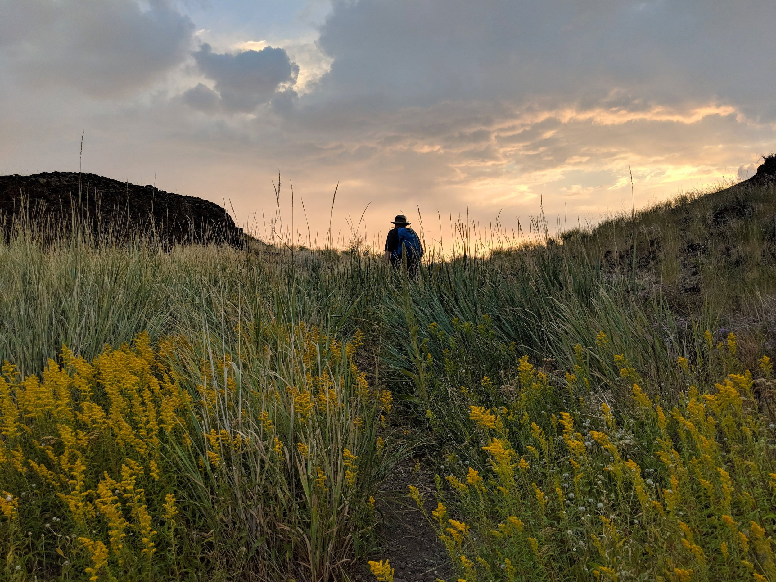 Hiking through flowers and grasses