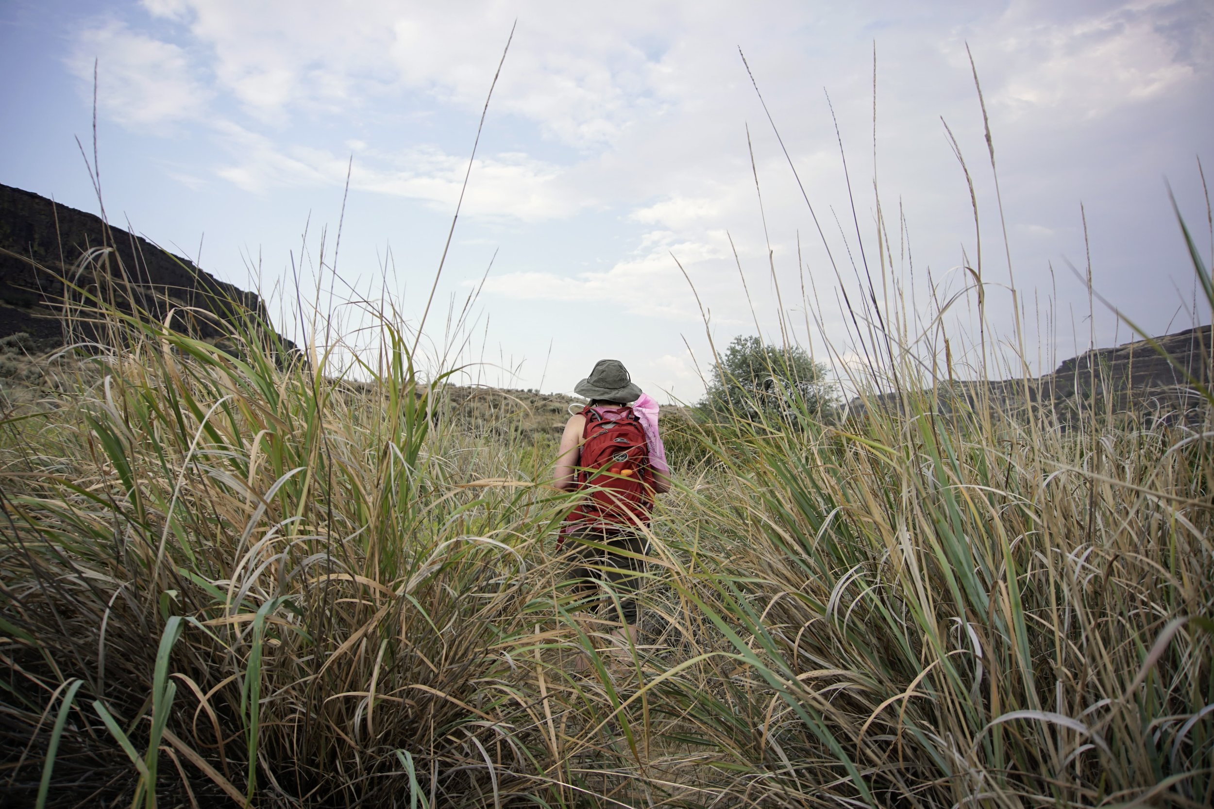 Tall grasses along trail