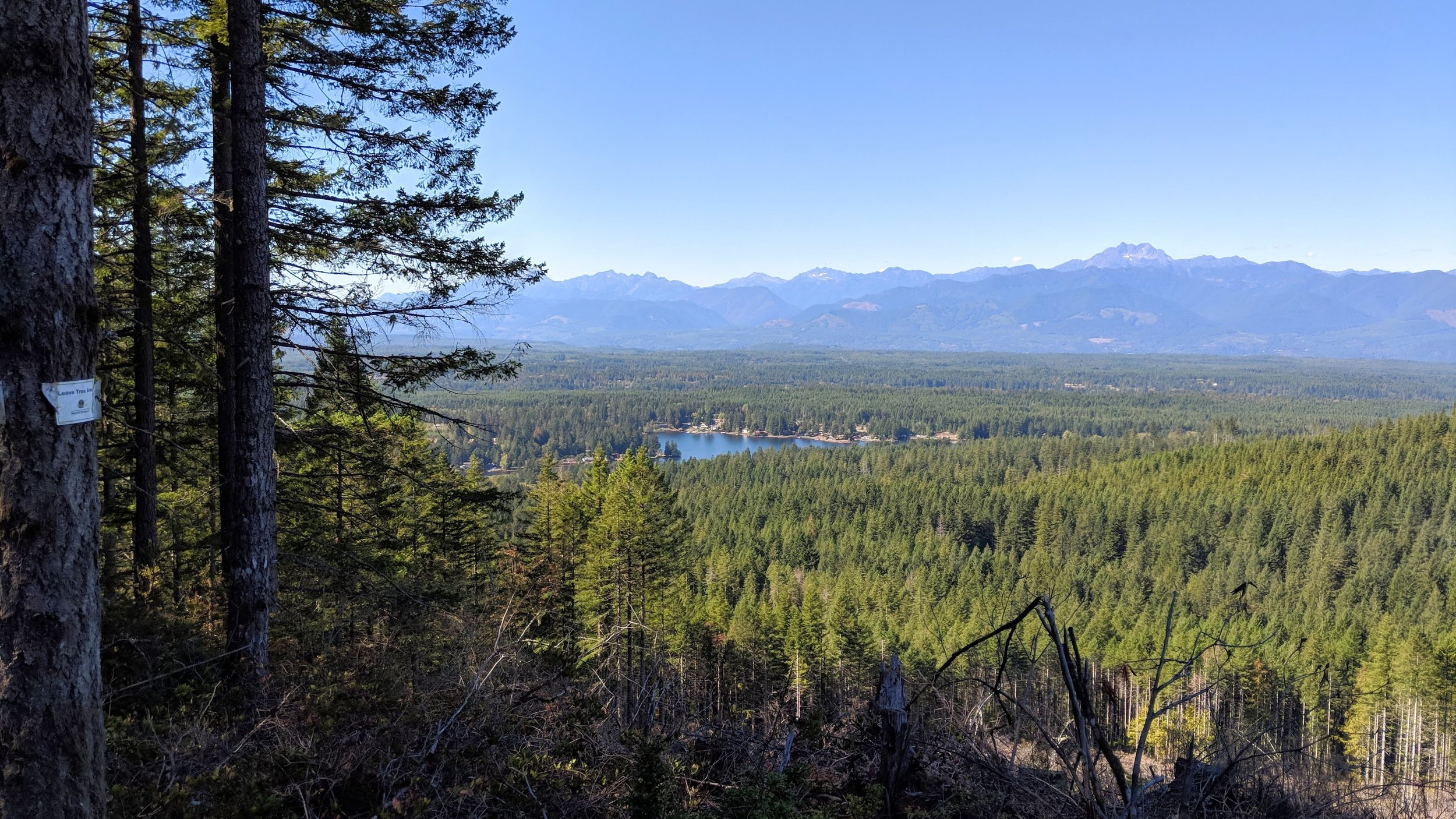 View of Olympic Mountains from Gold Creek Trail on Green Mountain