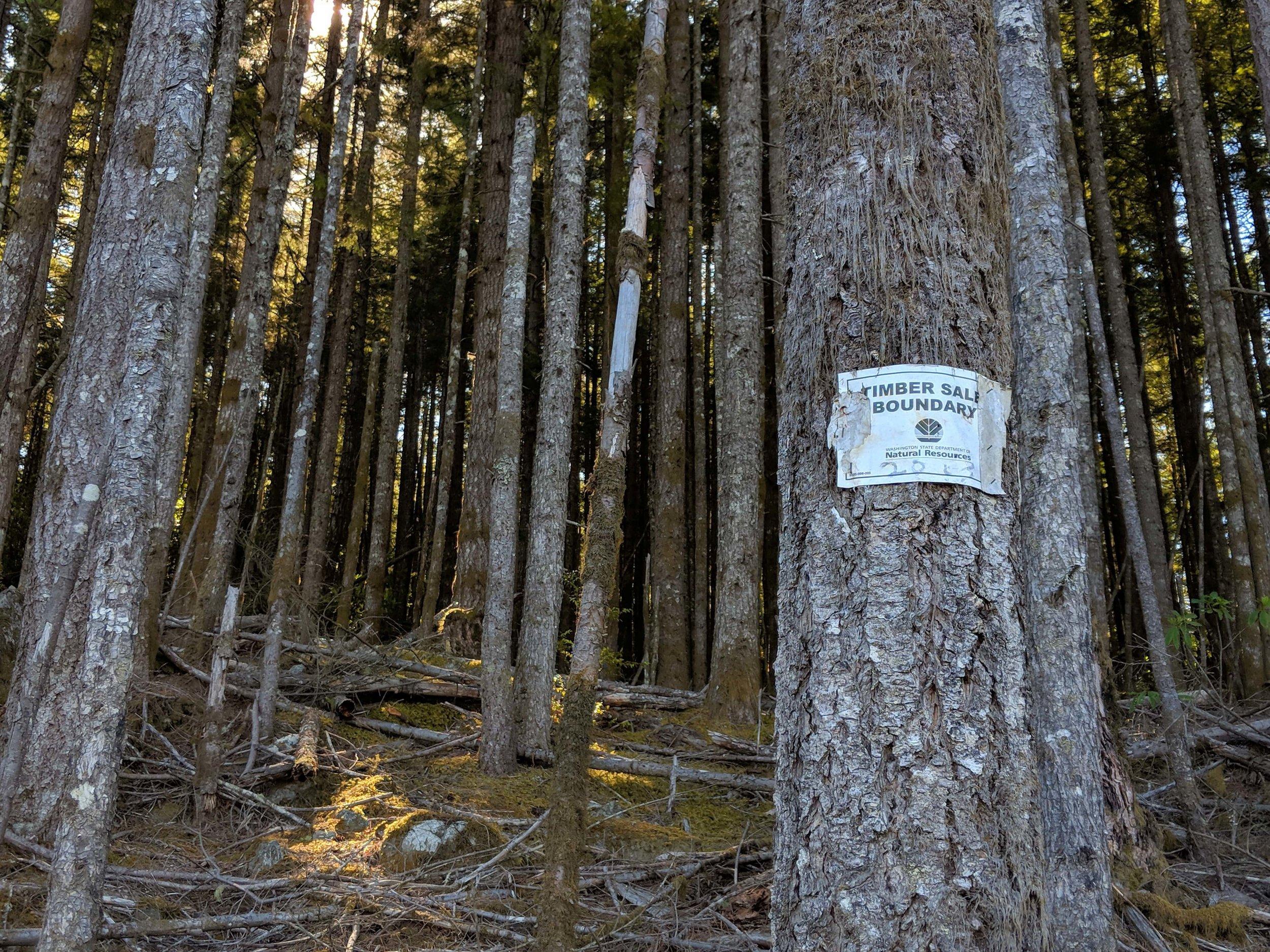 Timber sale boundary line