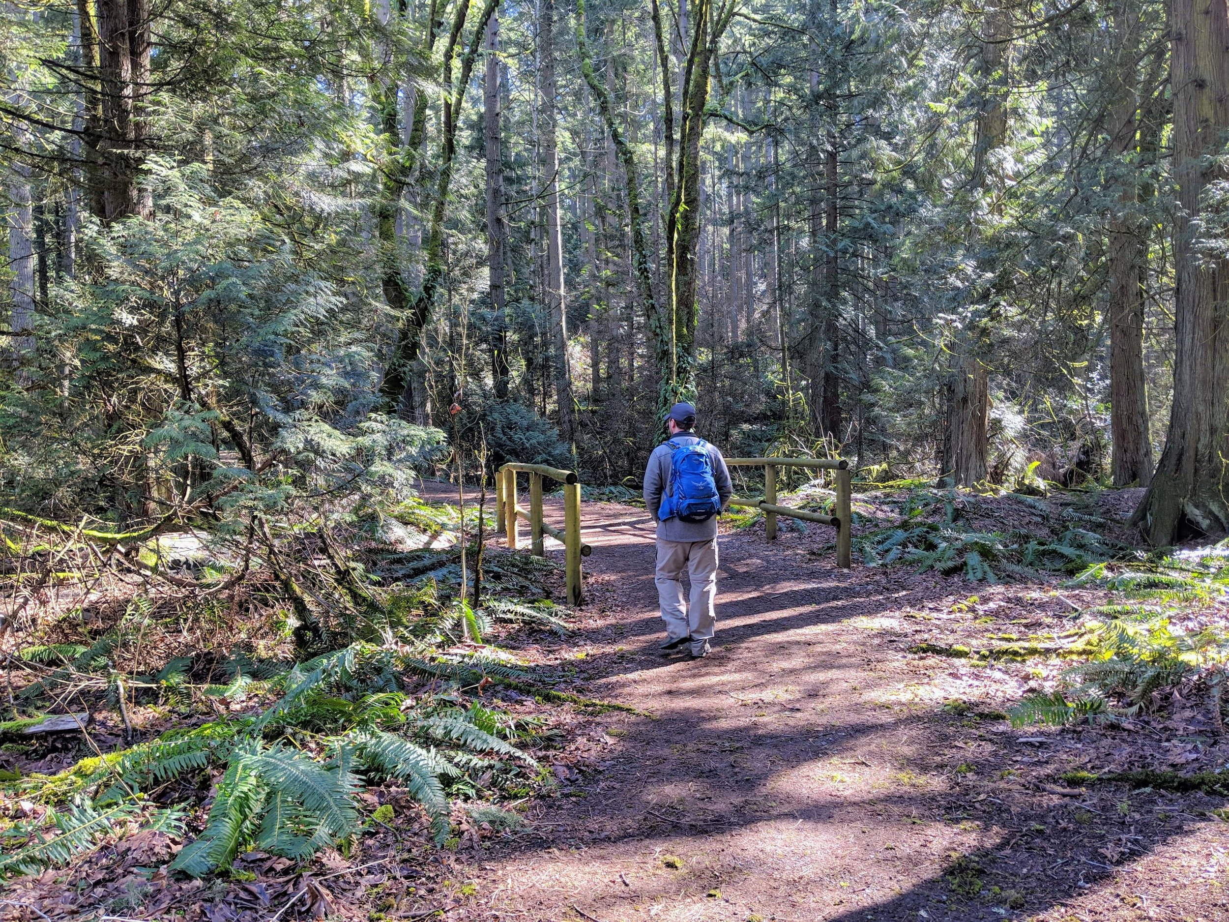 Hiking in Bridle Trails State Park